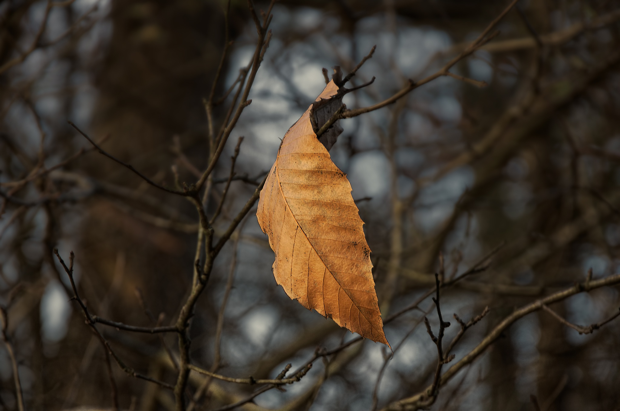 """""""Feuille d'automne 05""""  -  """"Autumn leaf"""" by Isabel Saij"""