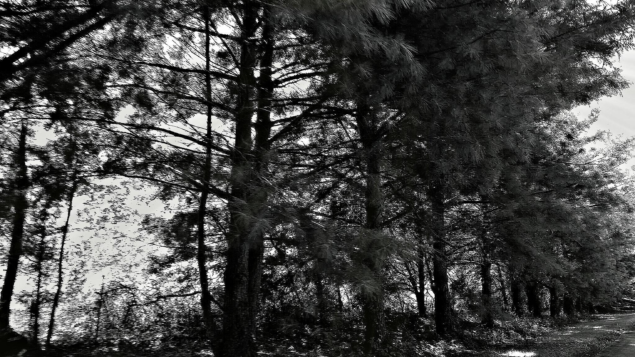 Just trees by marie.short.18
