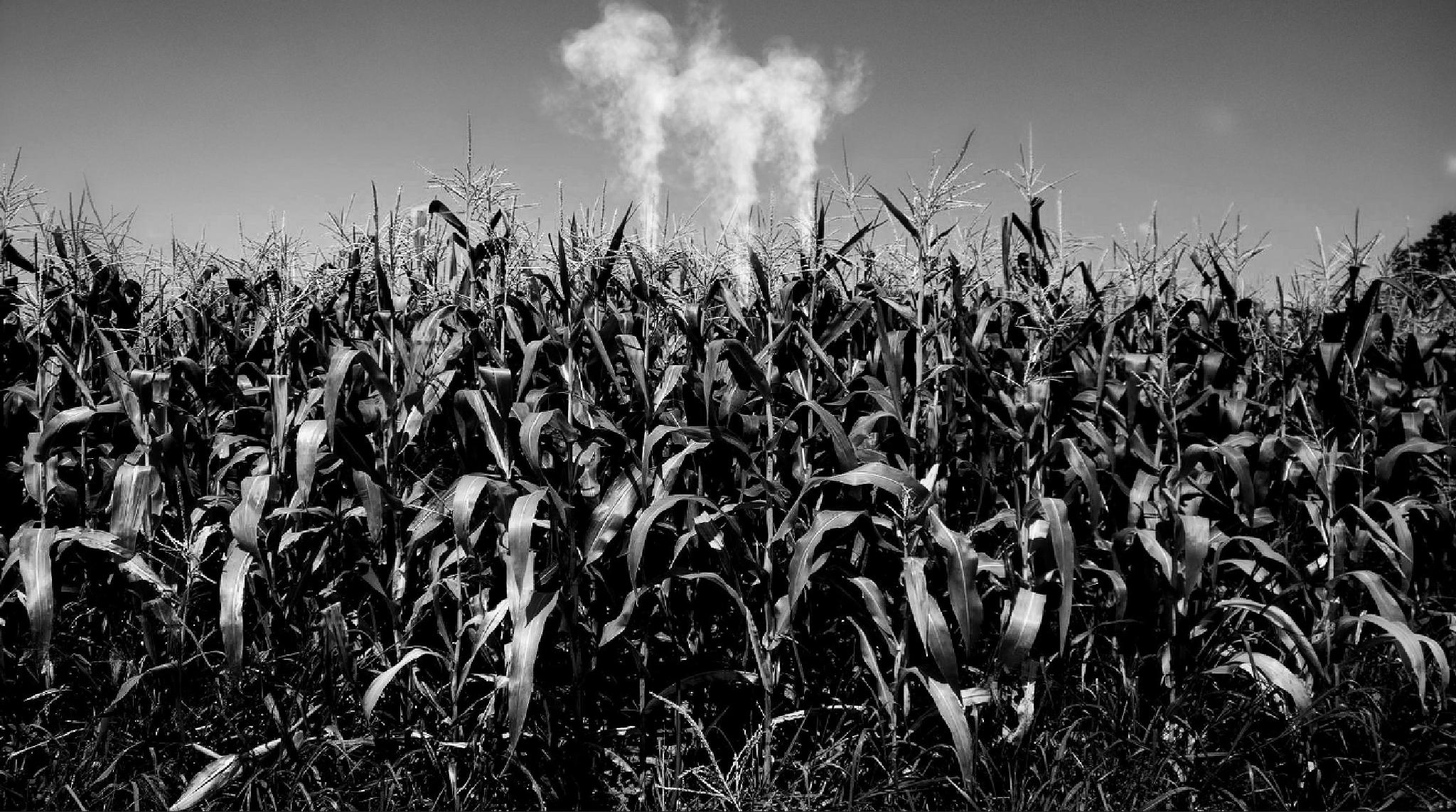 Smoke over thr crops by marie.short.18