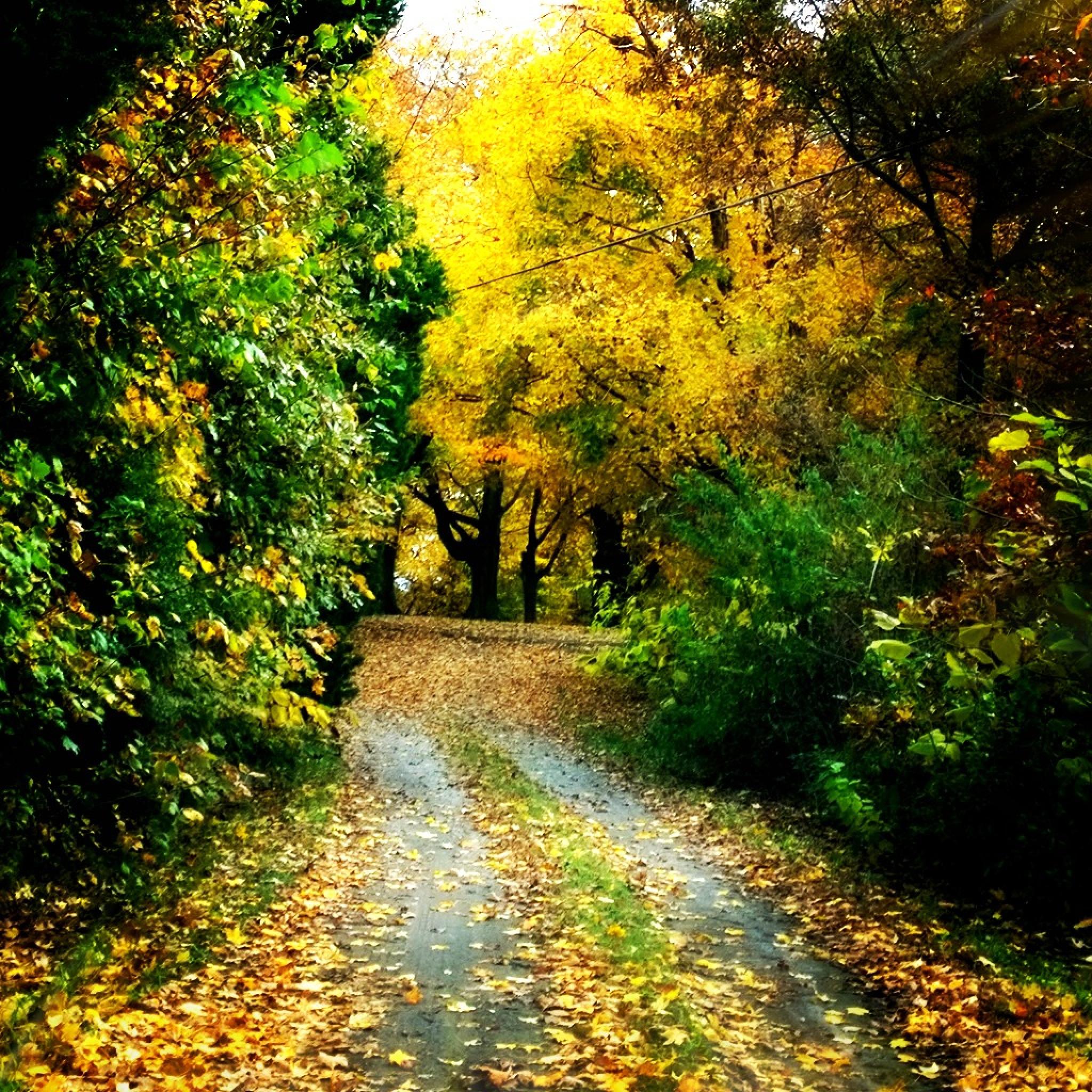 Golden path by marie.short.18