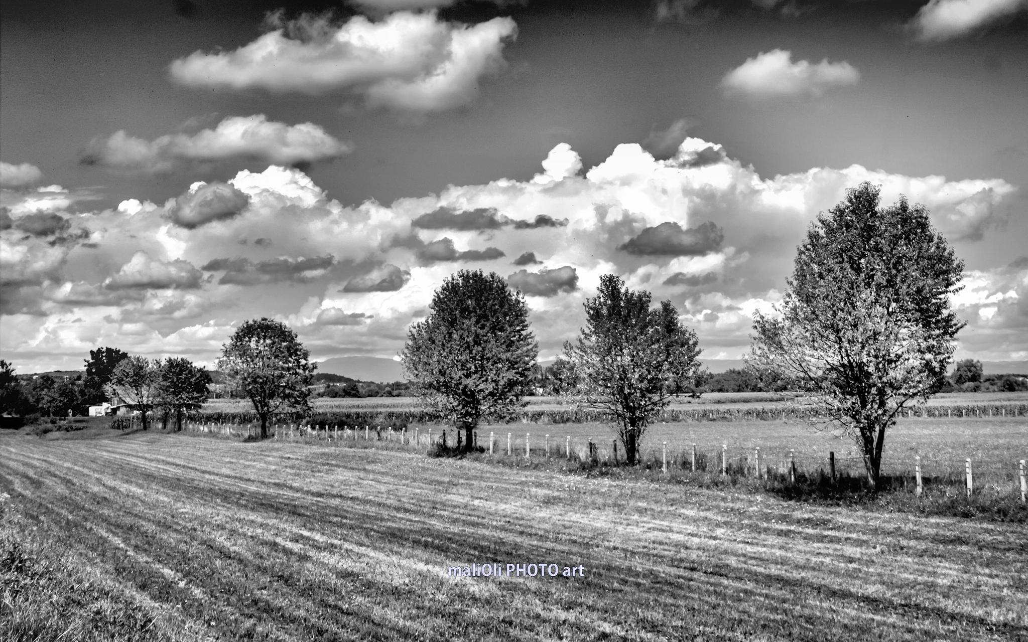 Plam trees in the line by oliversvob