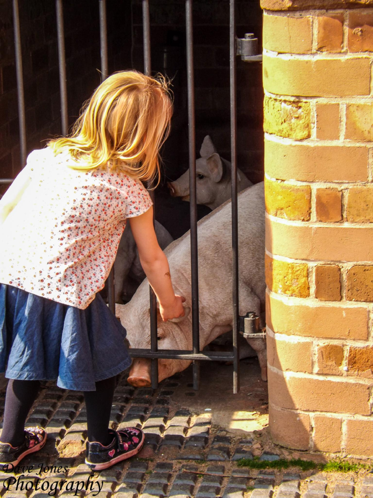 Pet the Pig by DaveJonesPhotography