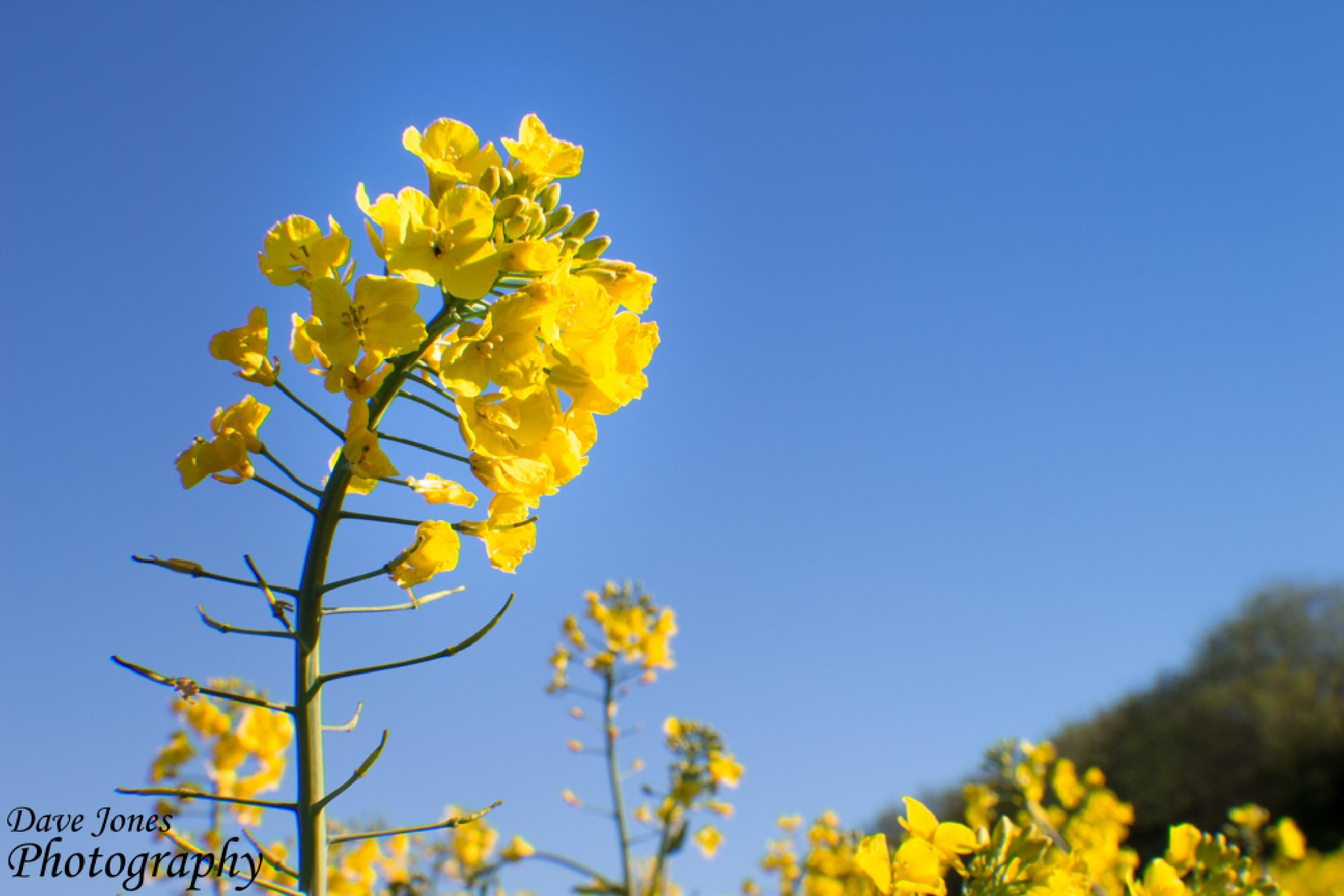 A Bit of Yellow by DaveJonesPhotography
