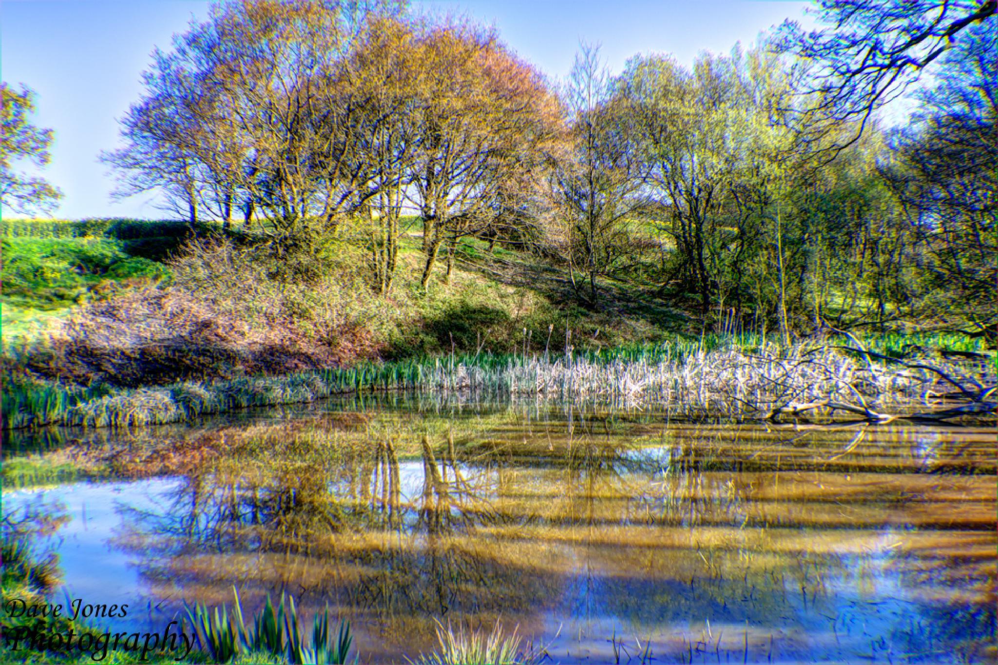 Pond HDR by DaveJonesPhotography