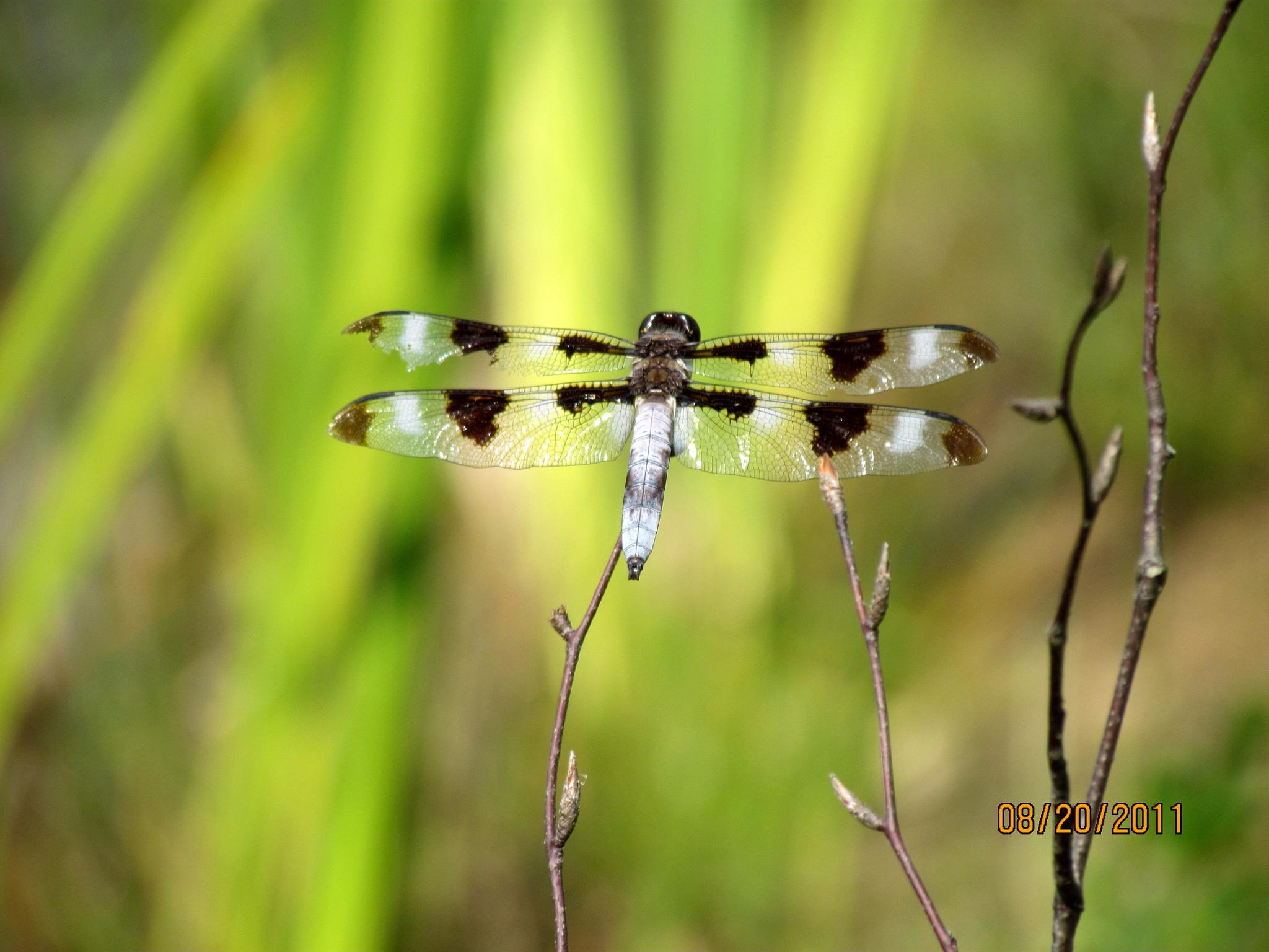 Dragonfly by cheryl.peters.9615