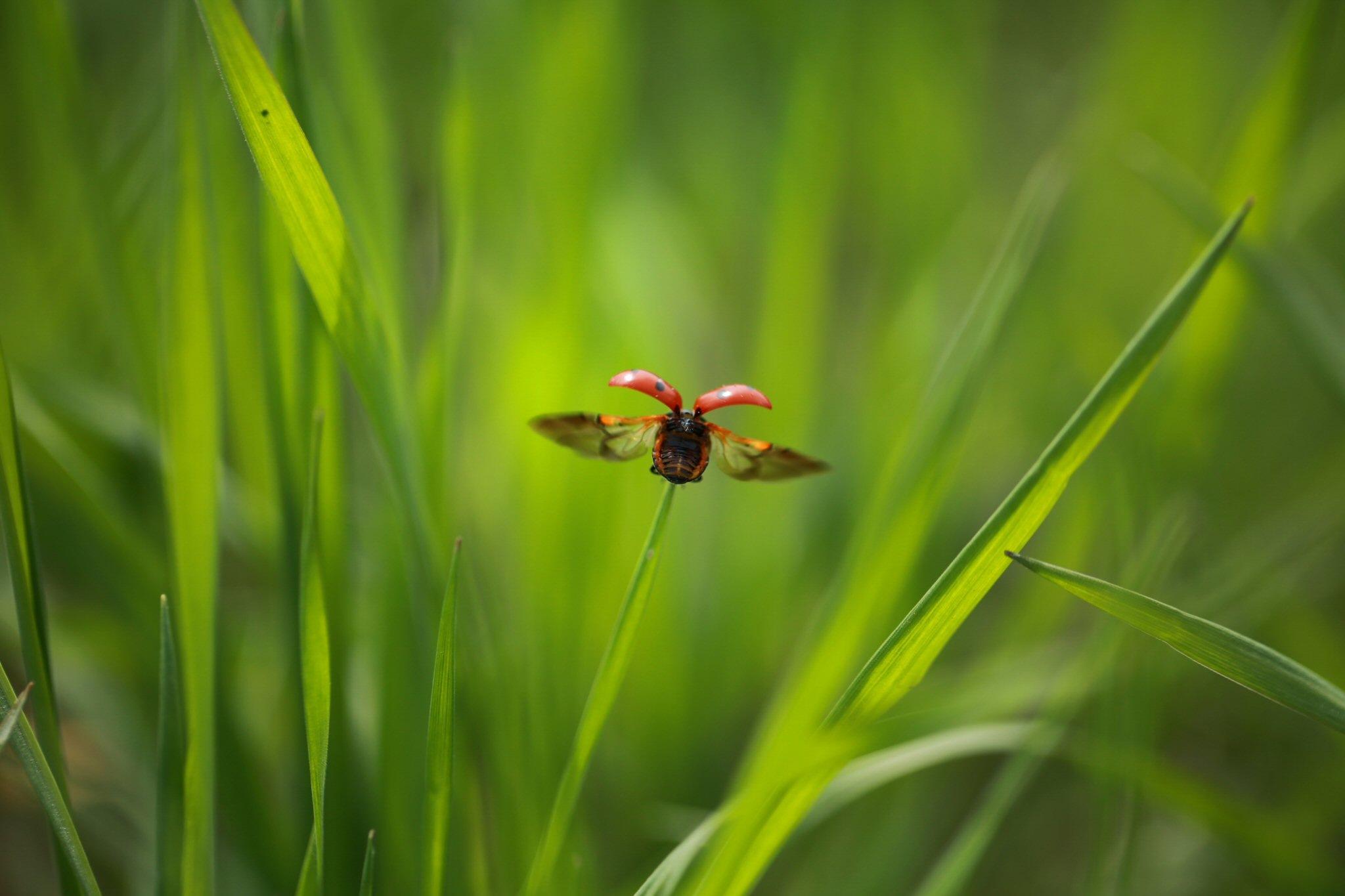 ladybug by bulentboz