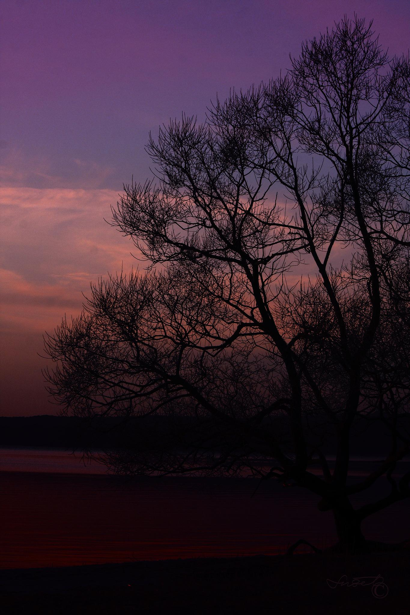 Photo in Landscape #evening #purple #sky