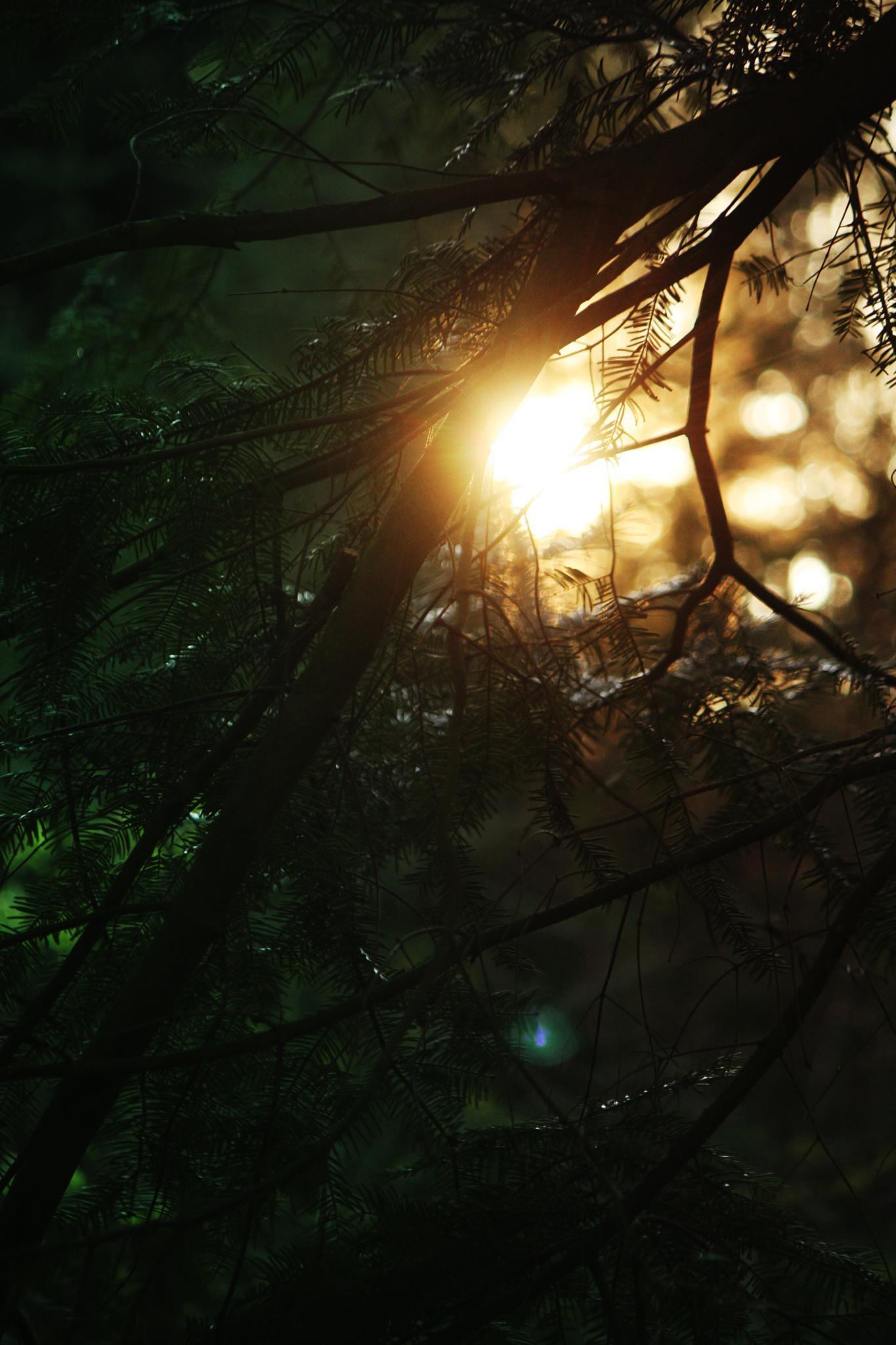 Pikaboo says the sun by snezana.lindskog