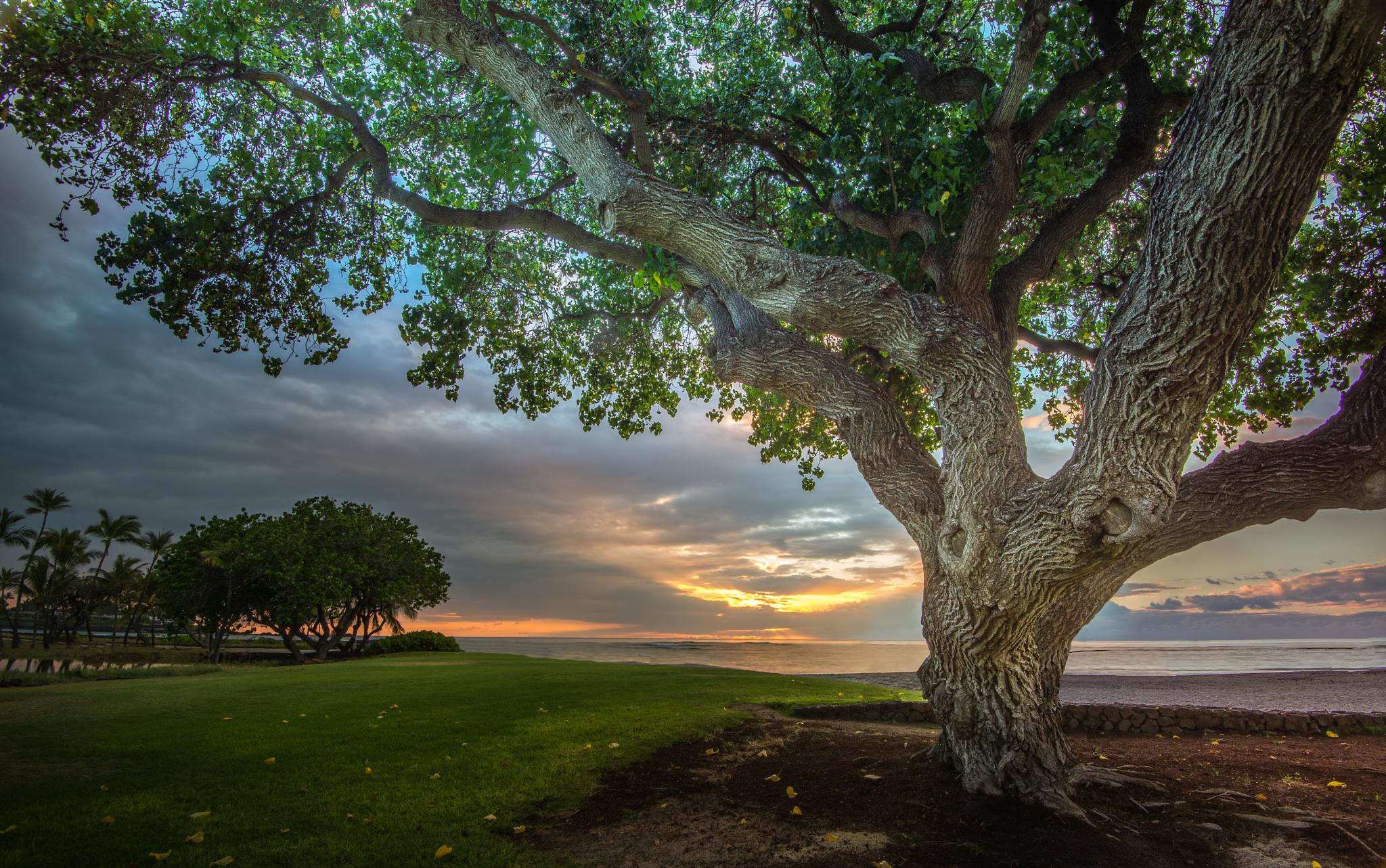 The tree by the ocean by Samuel Lethier