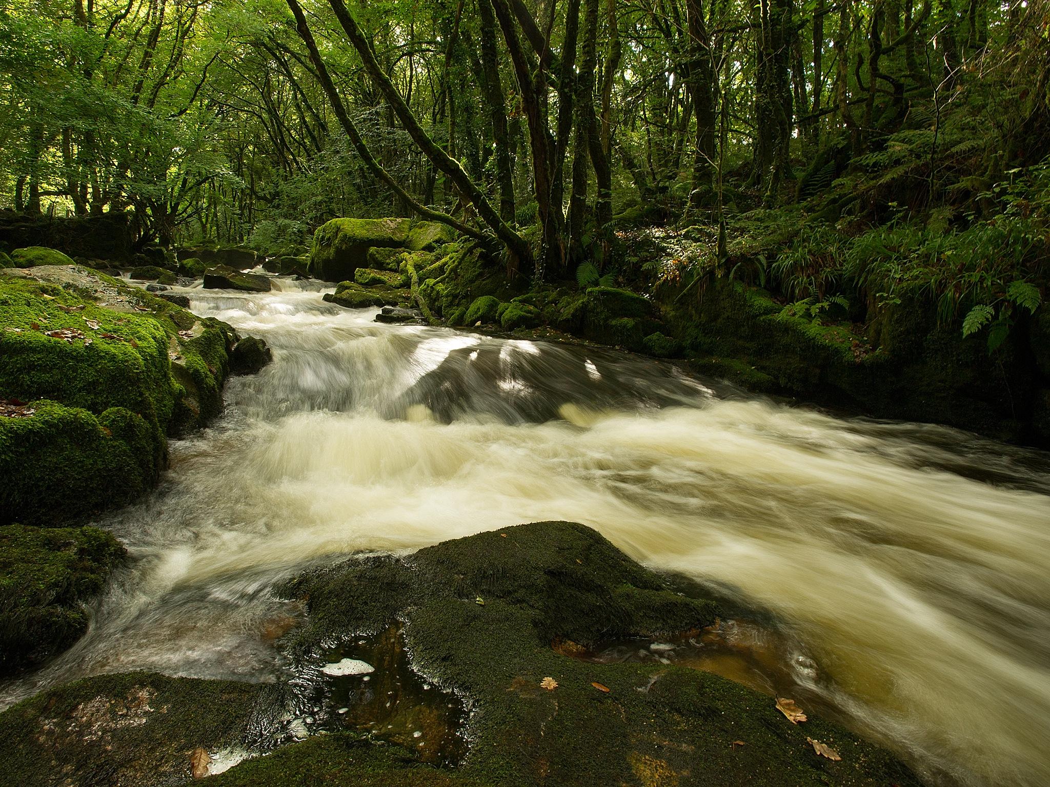 Golitho Falls, Bodmin Moor by Peter Puddiphatt