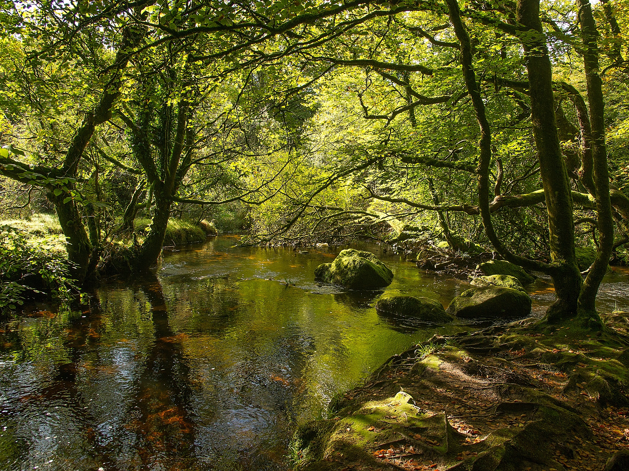 Golitho Falls, Bodmin Moor by Peter Puddiphatt