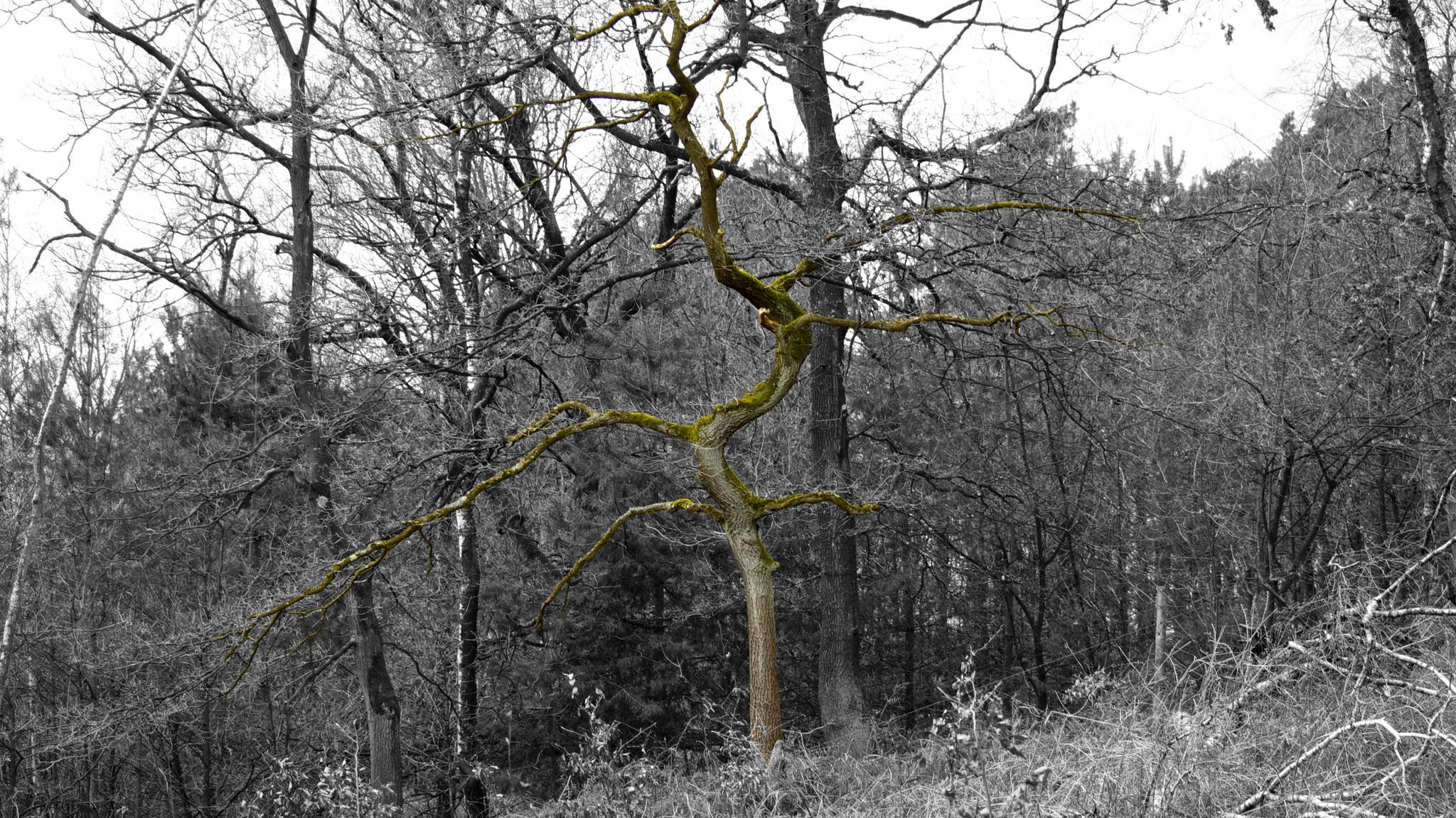 verwinkelter Baum by heinzbanger
