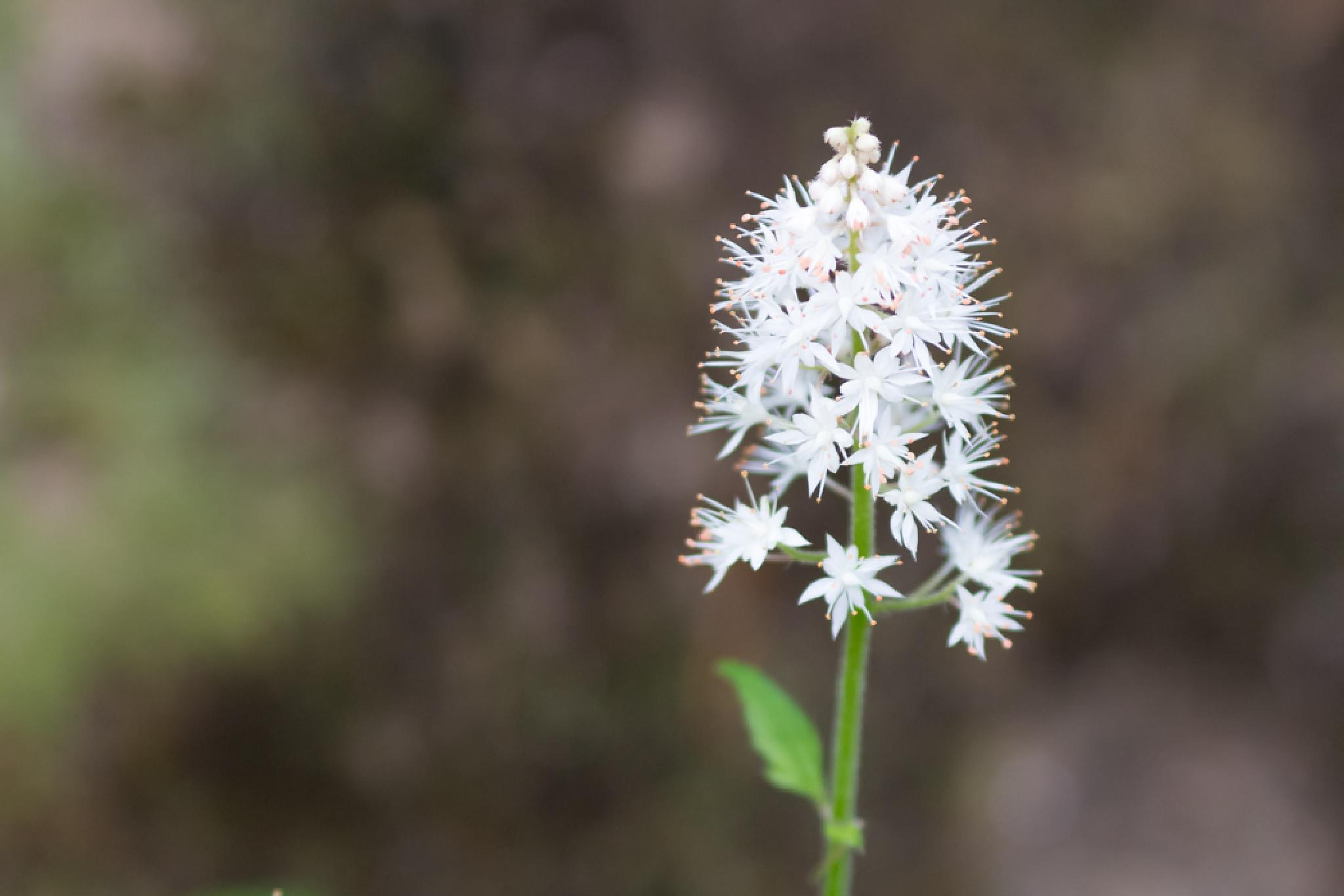 Tiny White Flower by The Butterfly Huntress