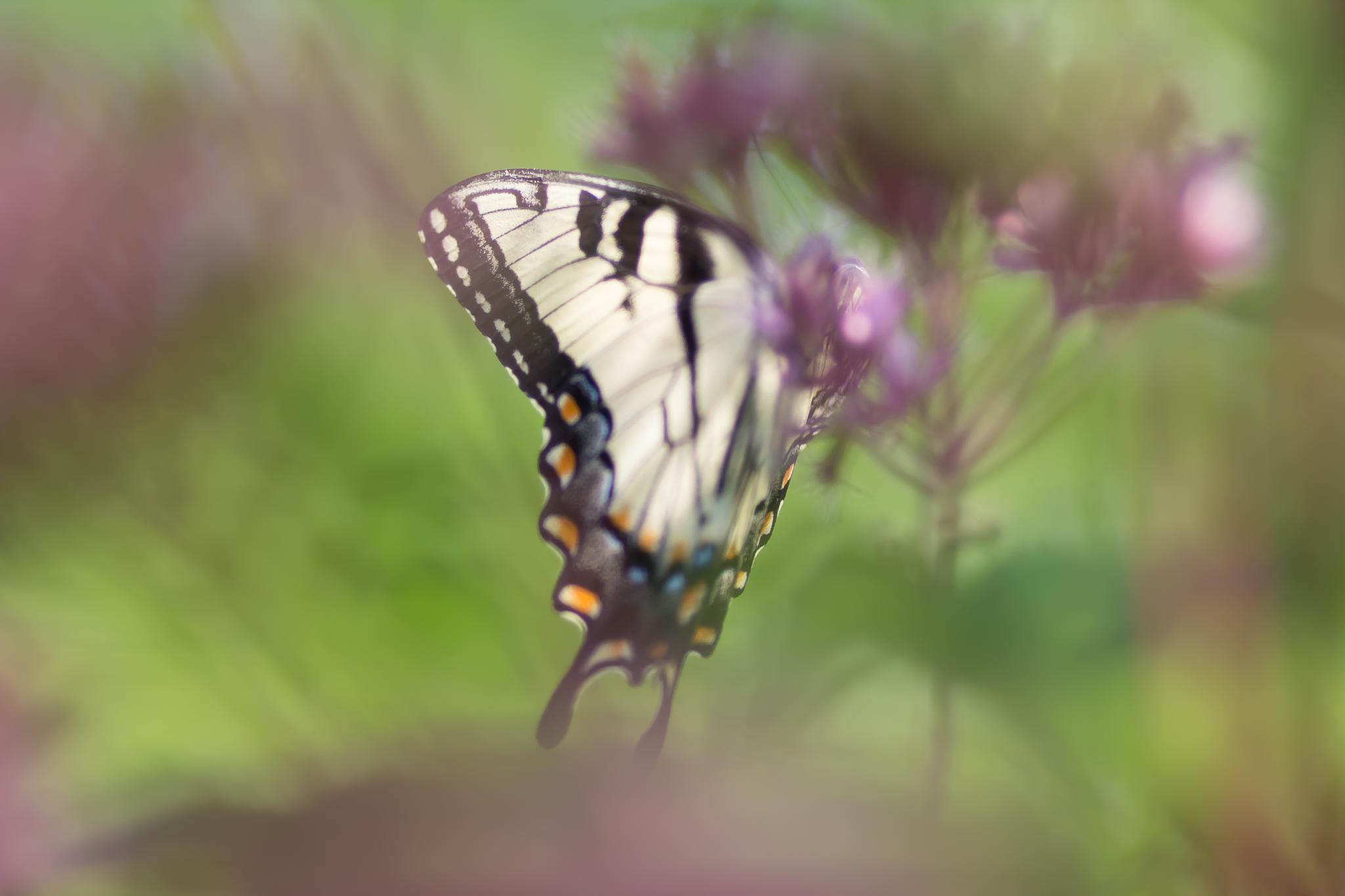 Butterfly Bokeh Too by The Butterfly Huntress
