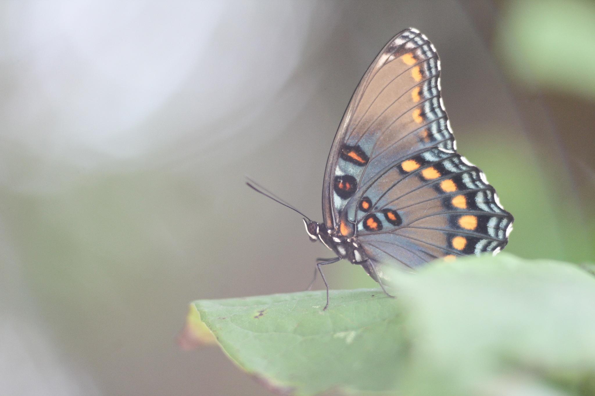Beauty in my Backyard by The Butterfly Huntress