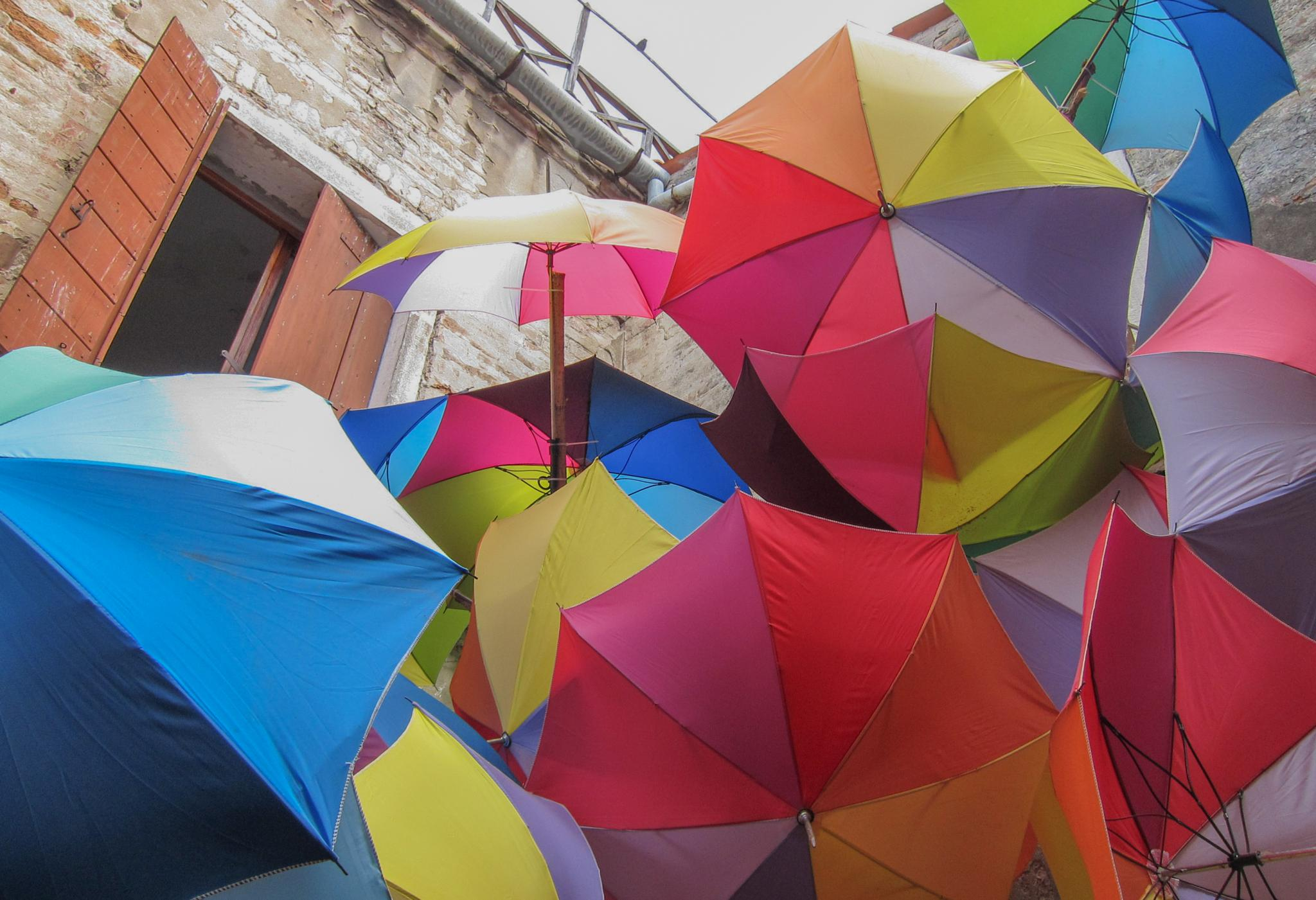 Umbrellas Up by Carolyn Chase