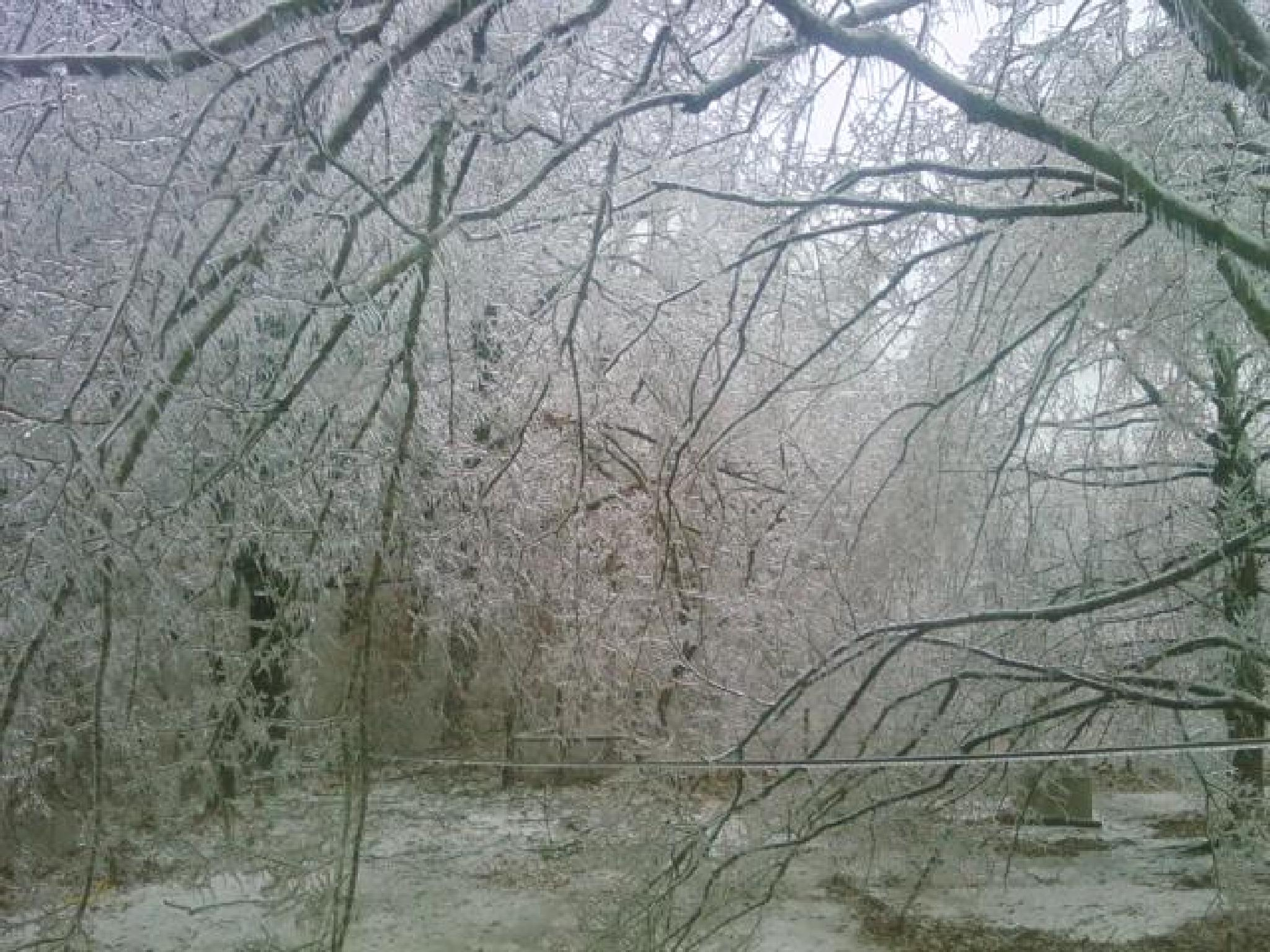 Ice Storm we had in Ky in 09 by netty716