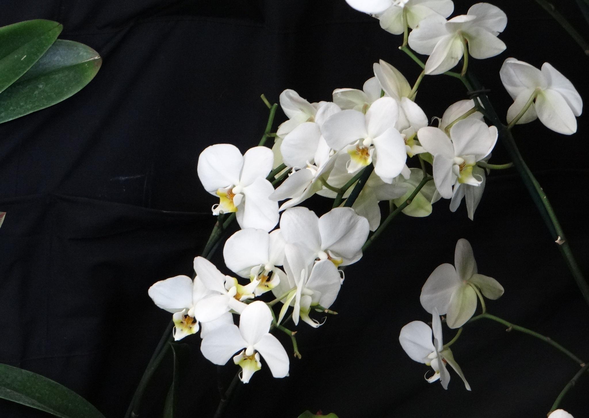 Photo in Macro #exposición #orquídeas #guatemala