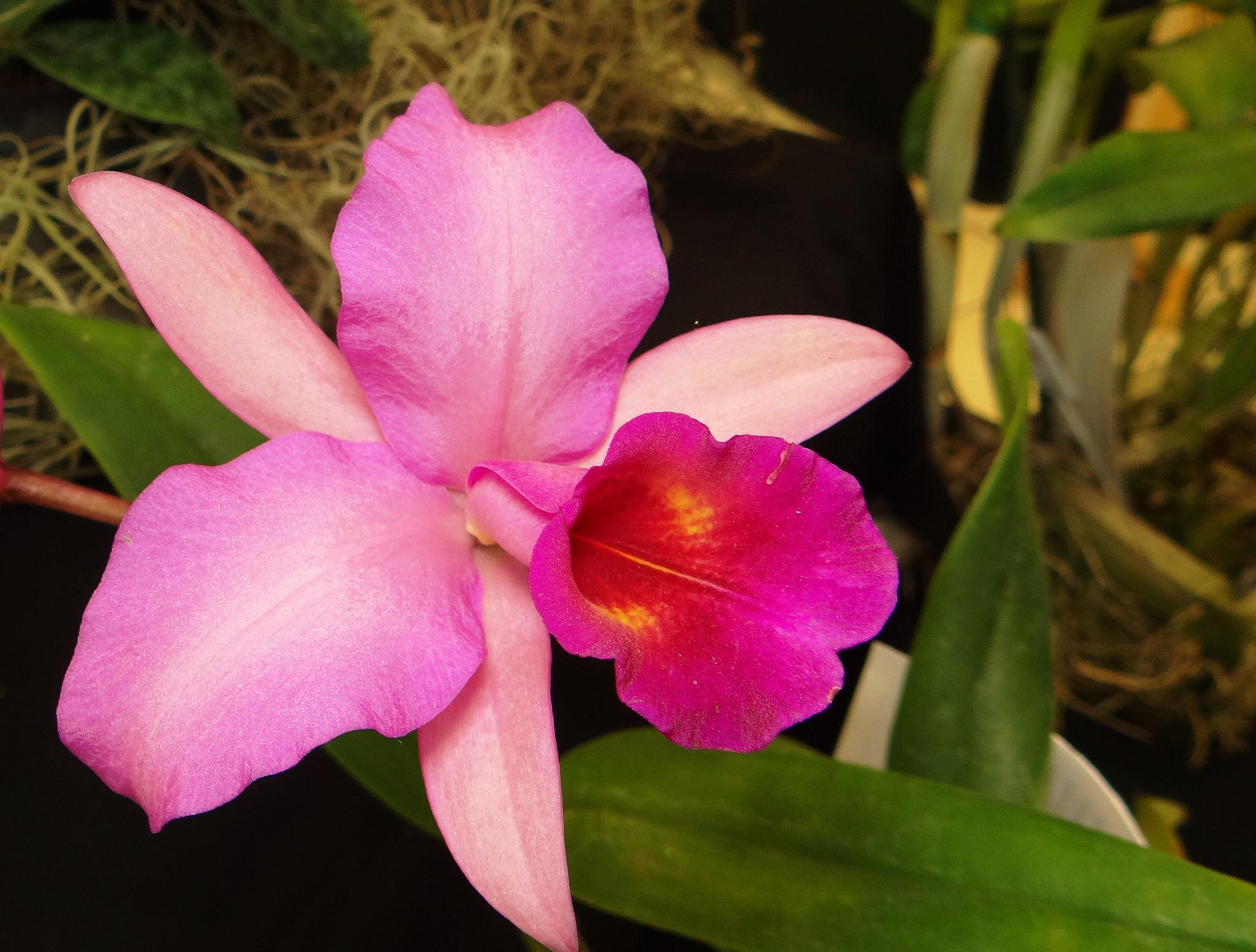 Photo in Macro #orquídeas #exposición #guatemala