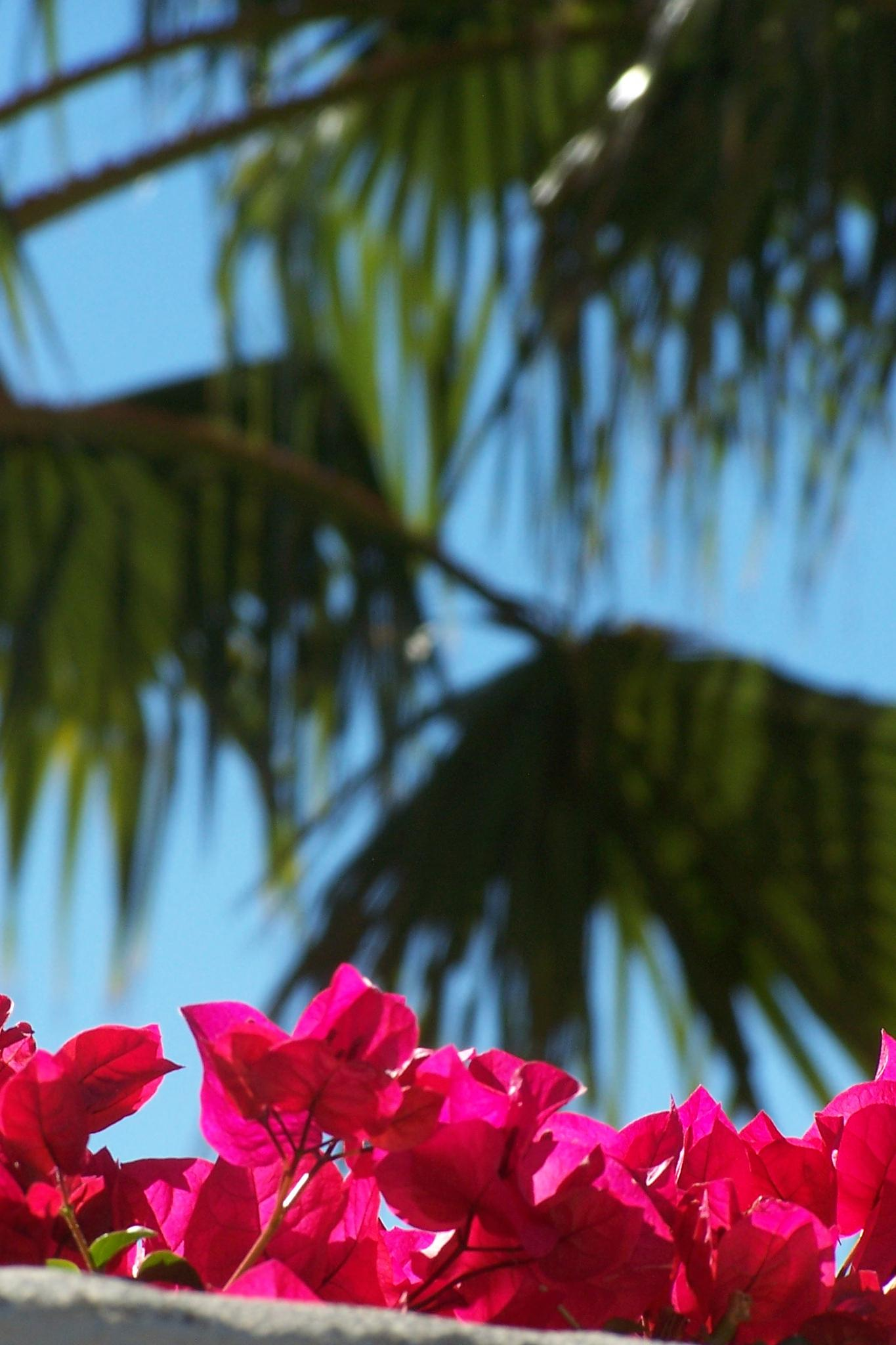 Palm Trees & Bougainvillea by ArleenDel