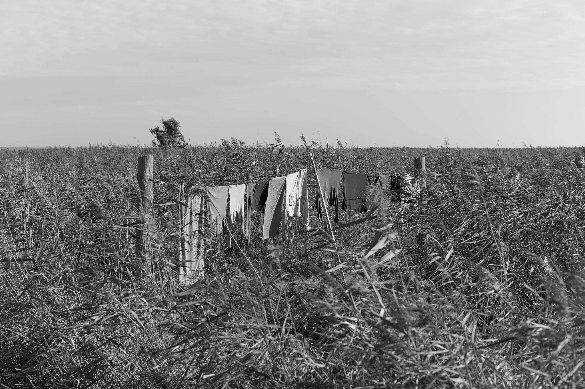 Laundry drying in the reed, Germany by PeWe