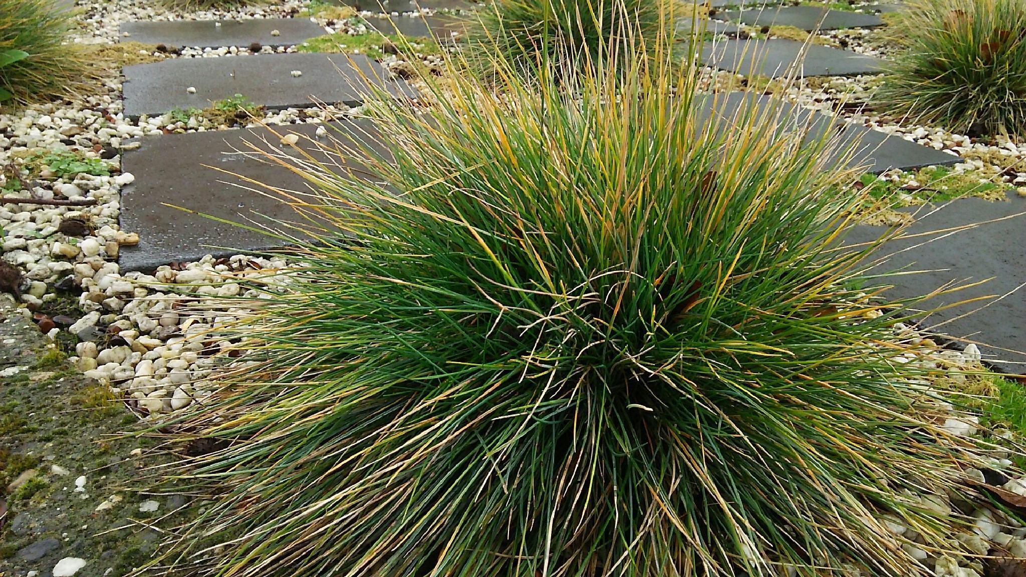 Grass by  Biniam