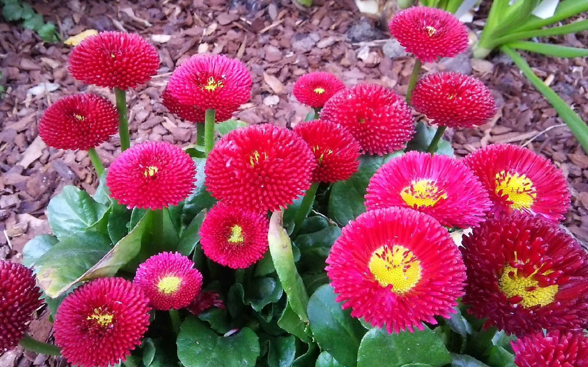 Flower by  Biniam