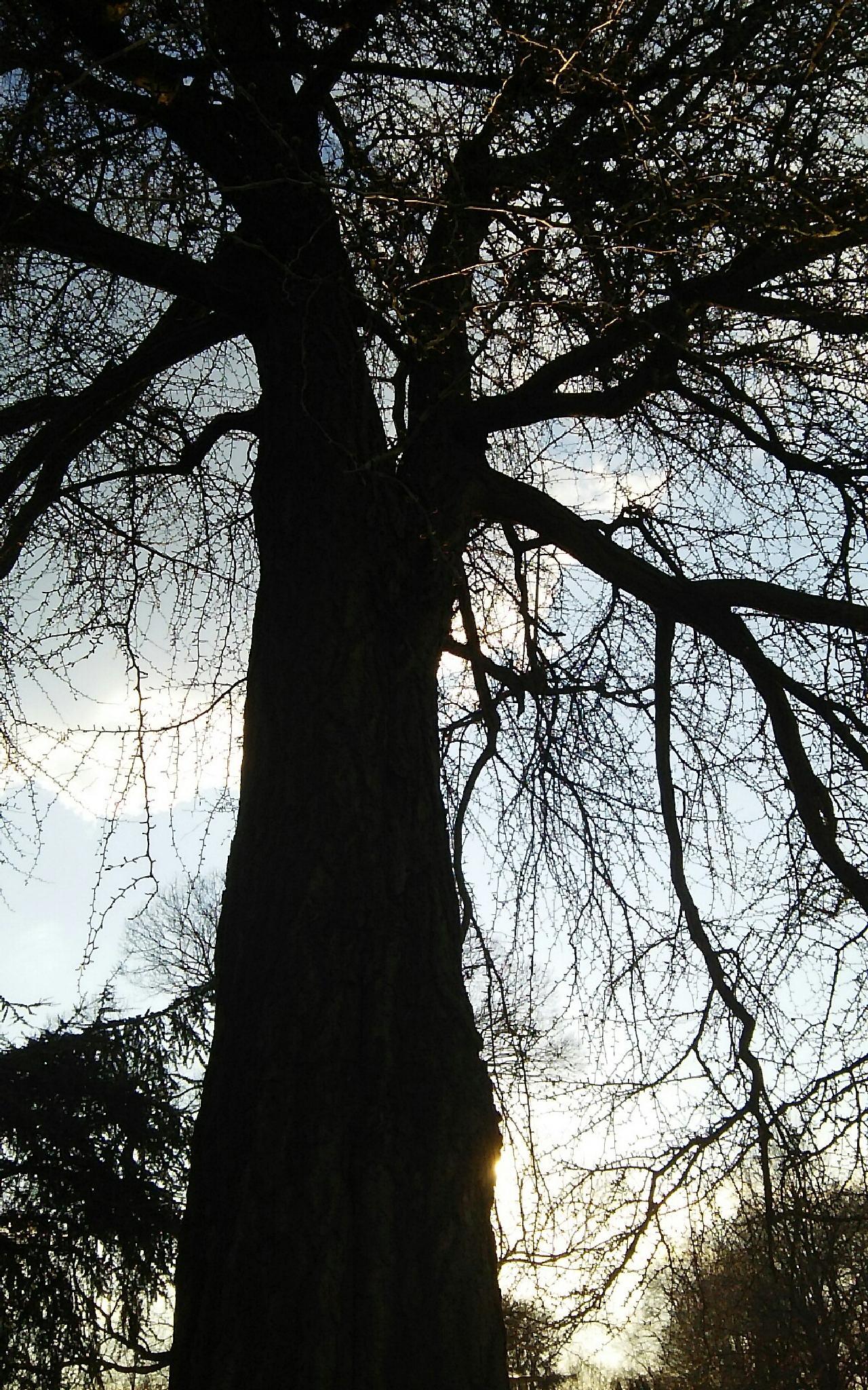 TreE & Sunlight by  Biniam