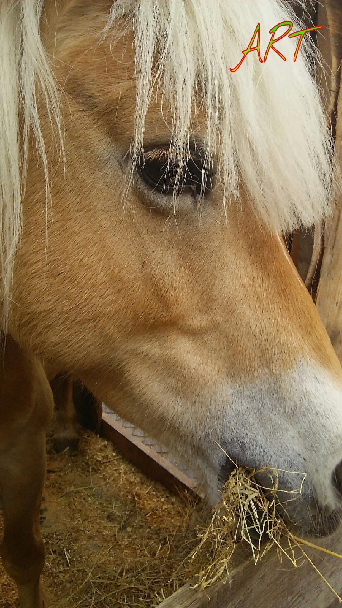 HORSE by  Biniam