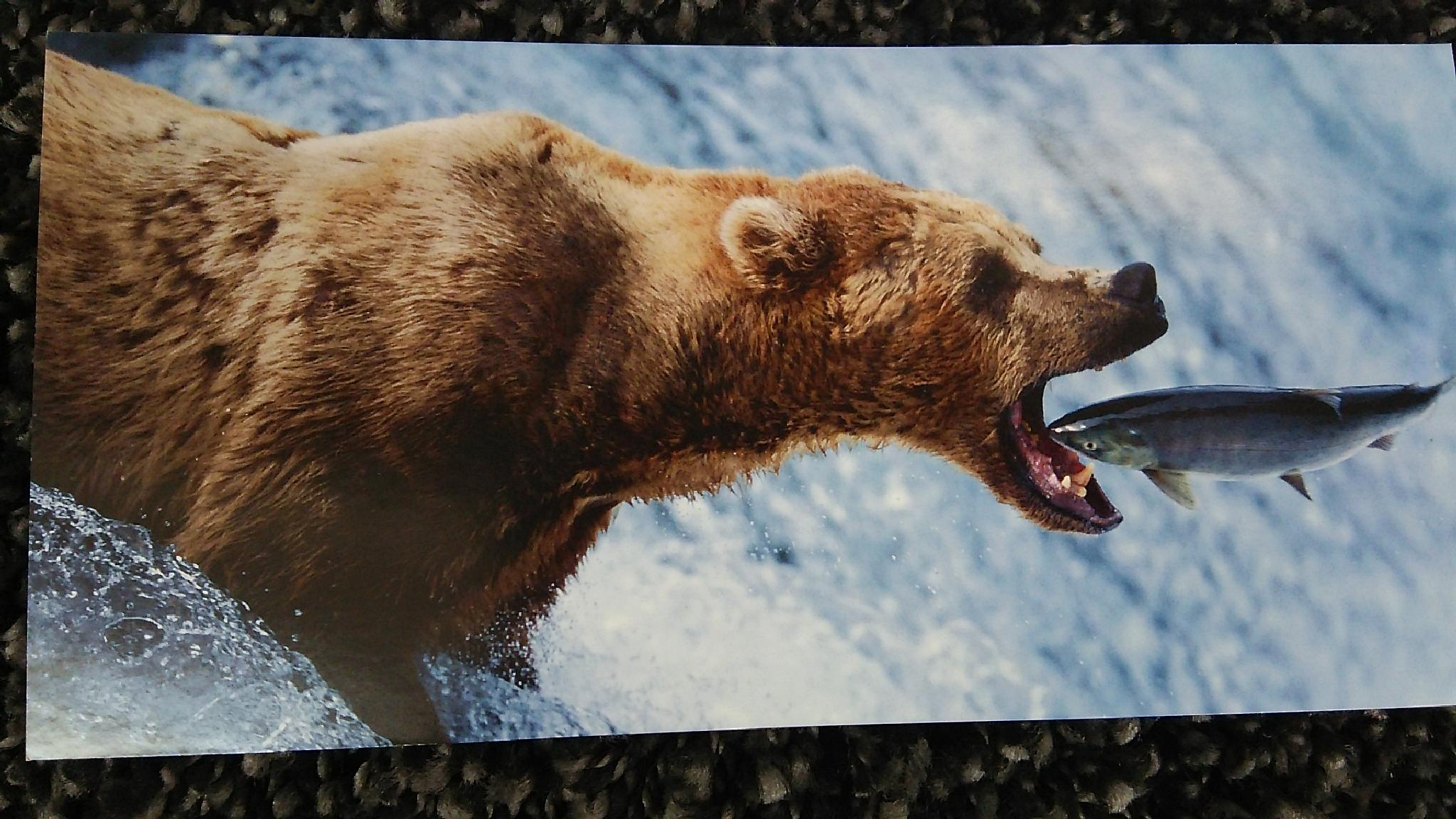 Bear @ Fish by  Biniam