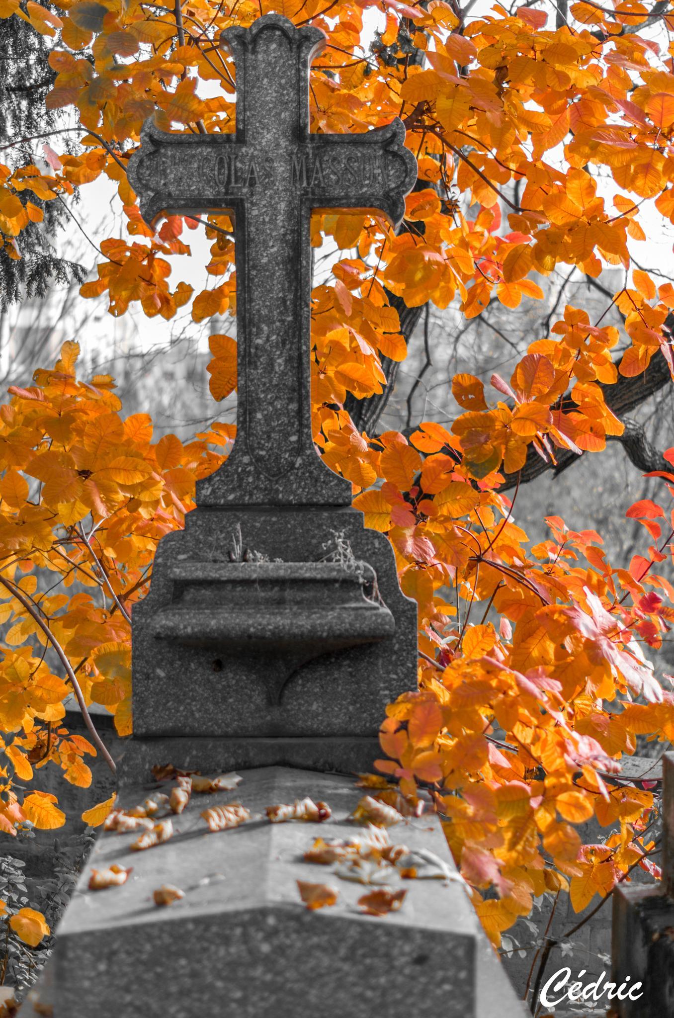 cimetiere pere lachaise automne, france, paris by cedricloy8