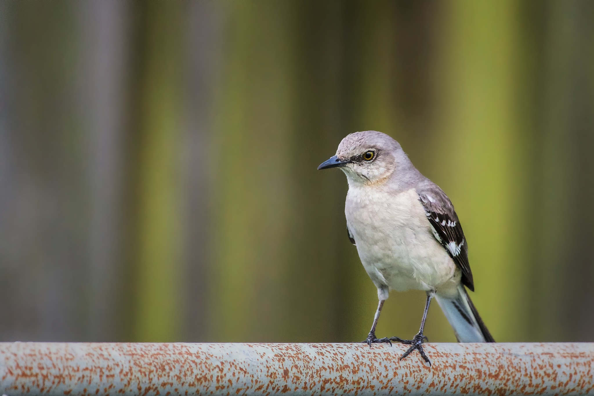 """Angry Bird"" by Carlos Quintero"