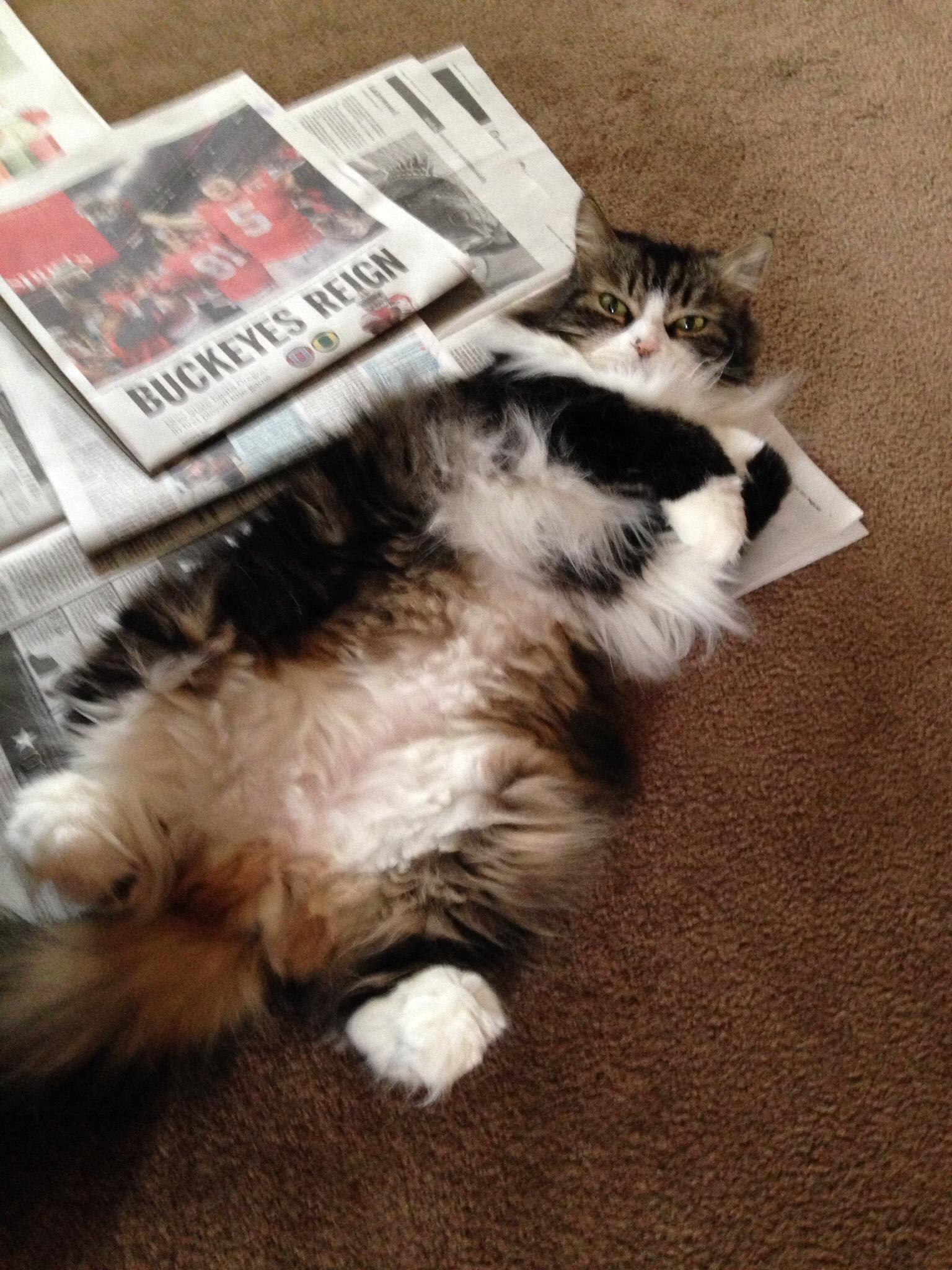 Eli loves the news paper  by lisa.ocallahan.9