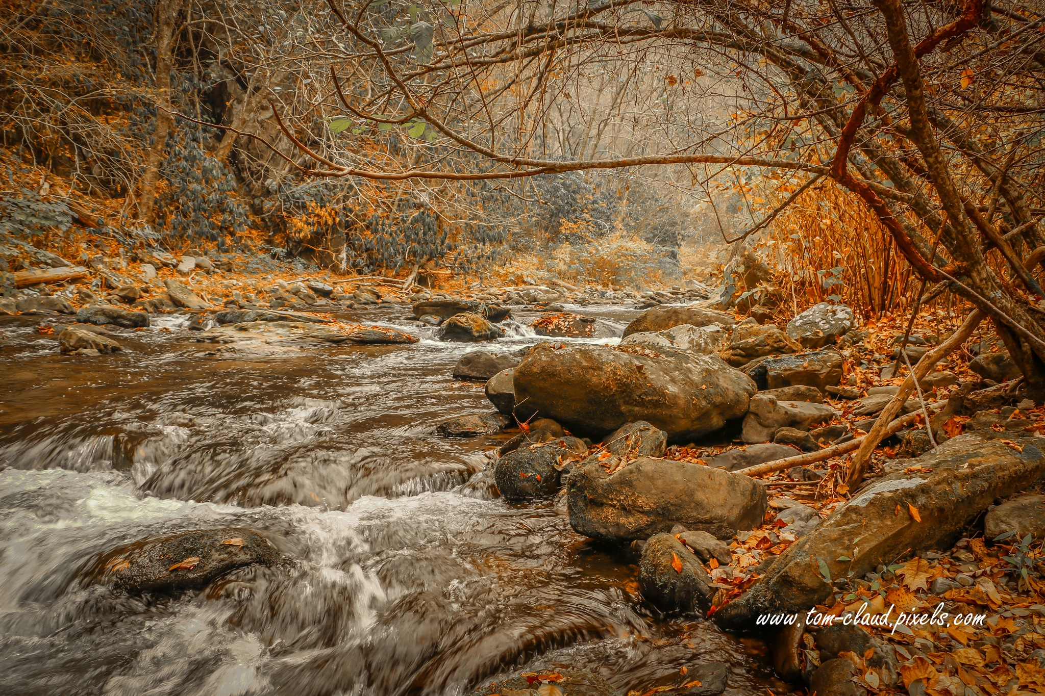 Mountain Stream with Tree Overhang #2 by TClaud