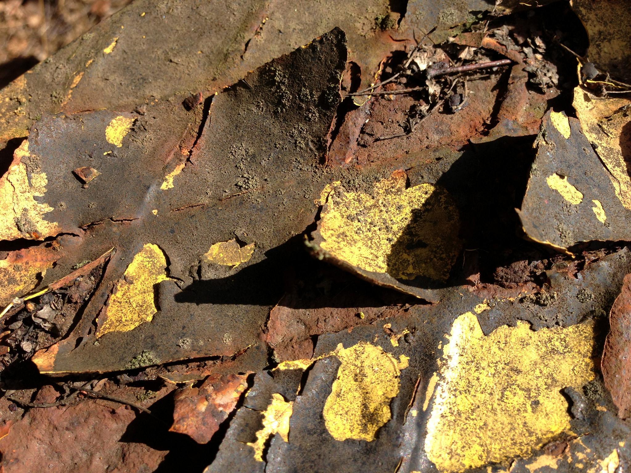 Rusty by hoffcecilia