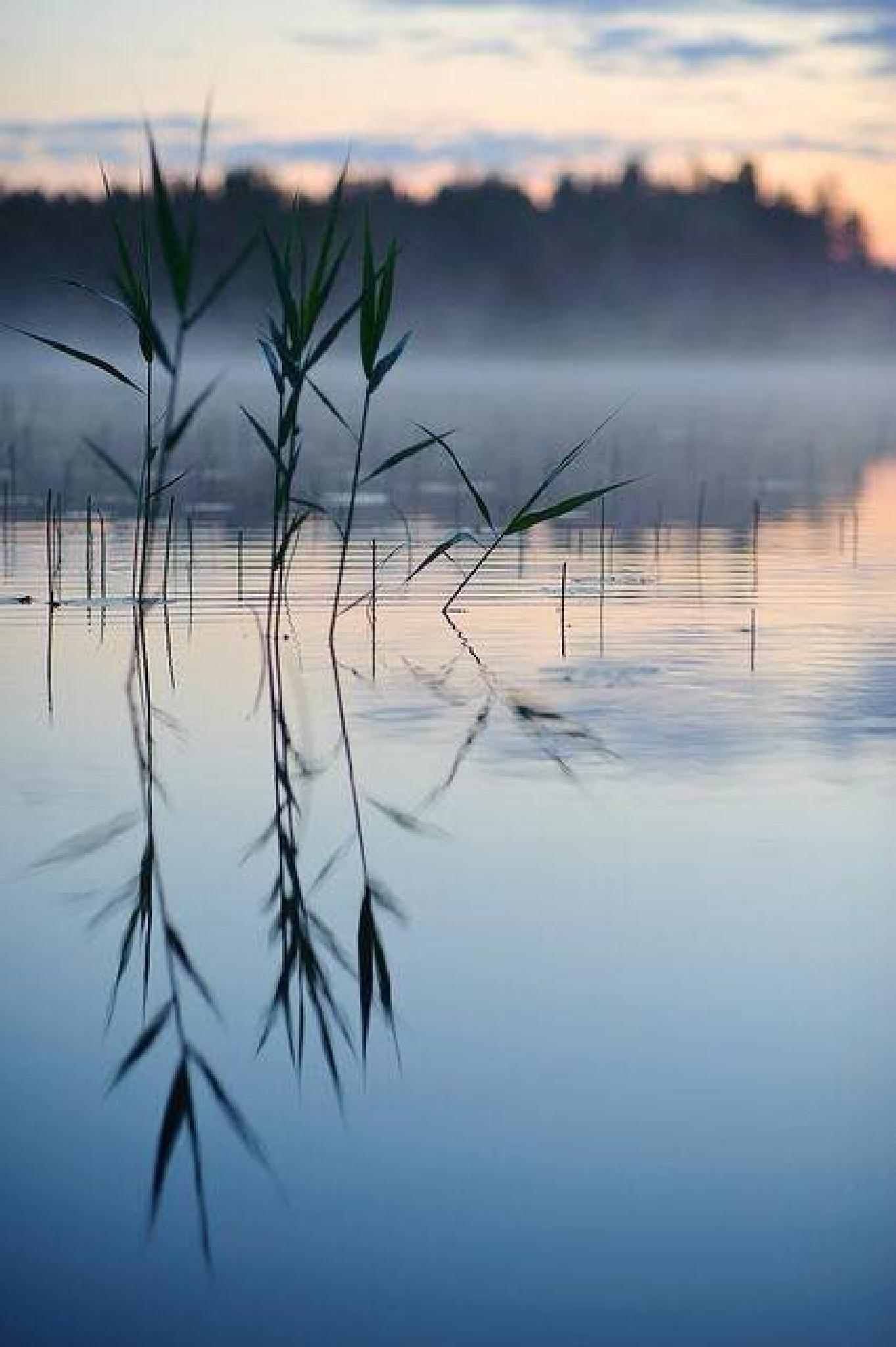 Serenity by shimmerjoy