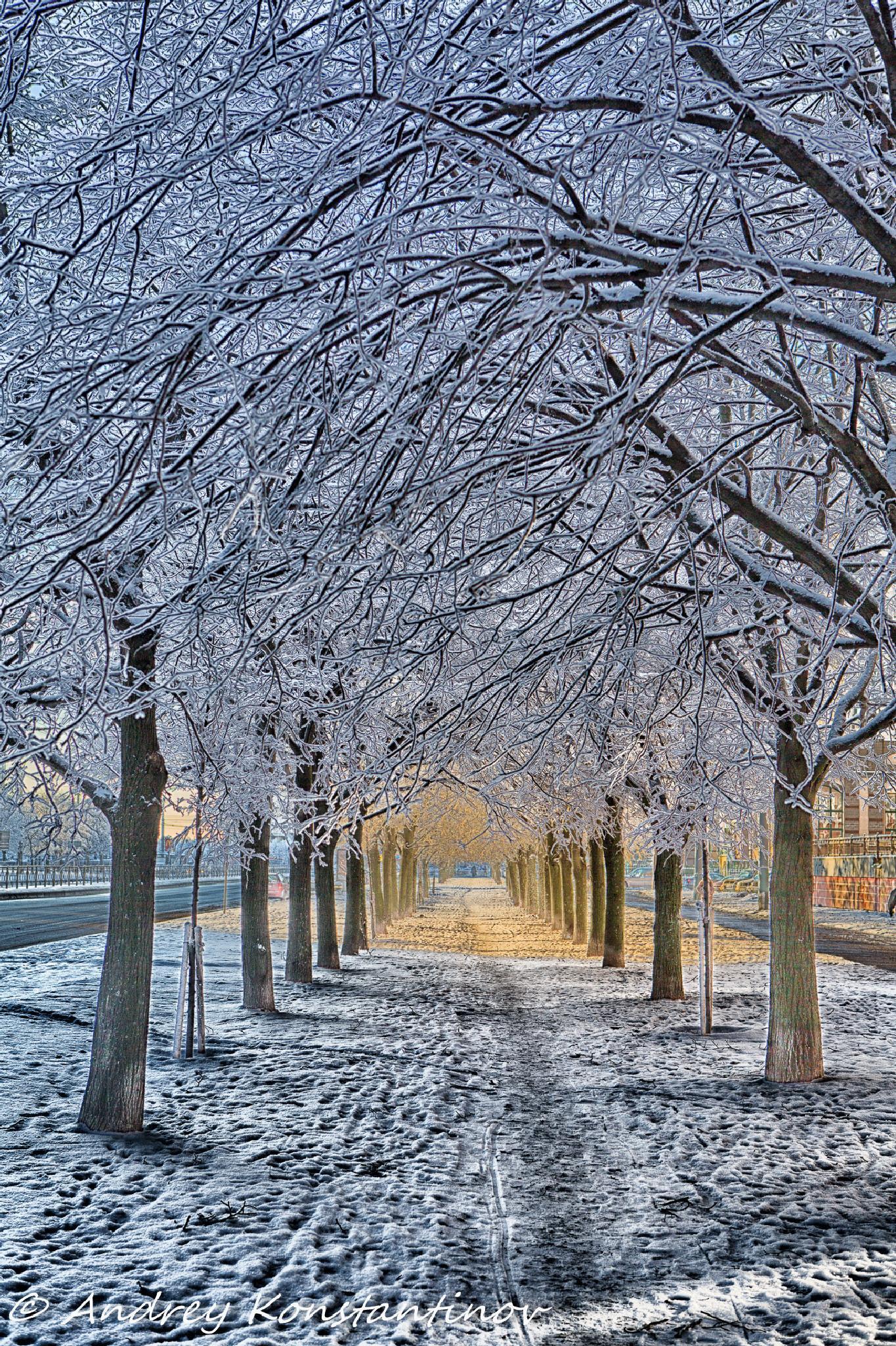 Winter sun by cinemandy
