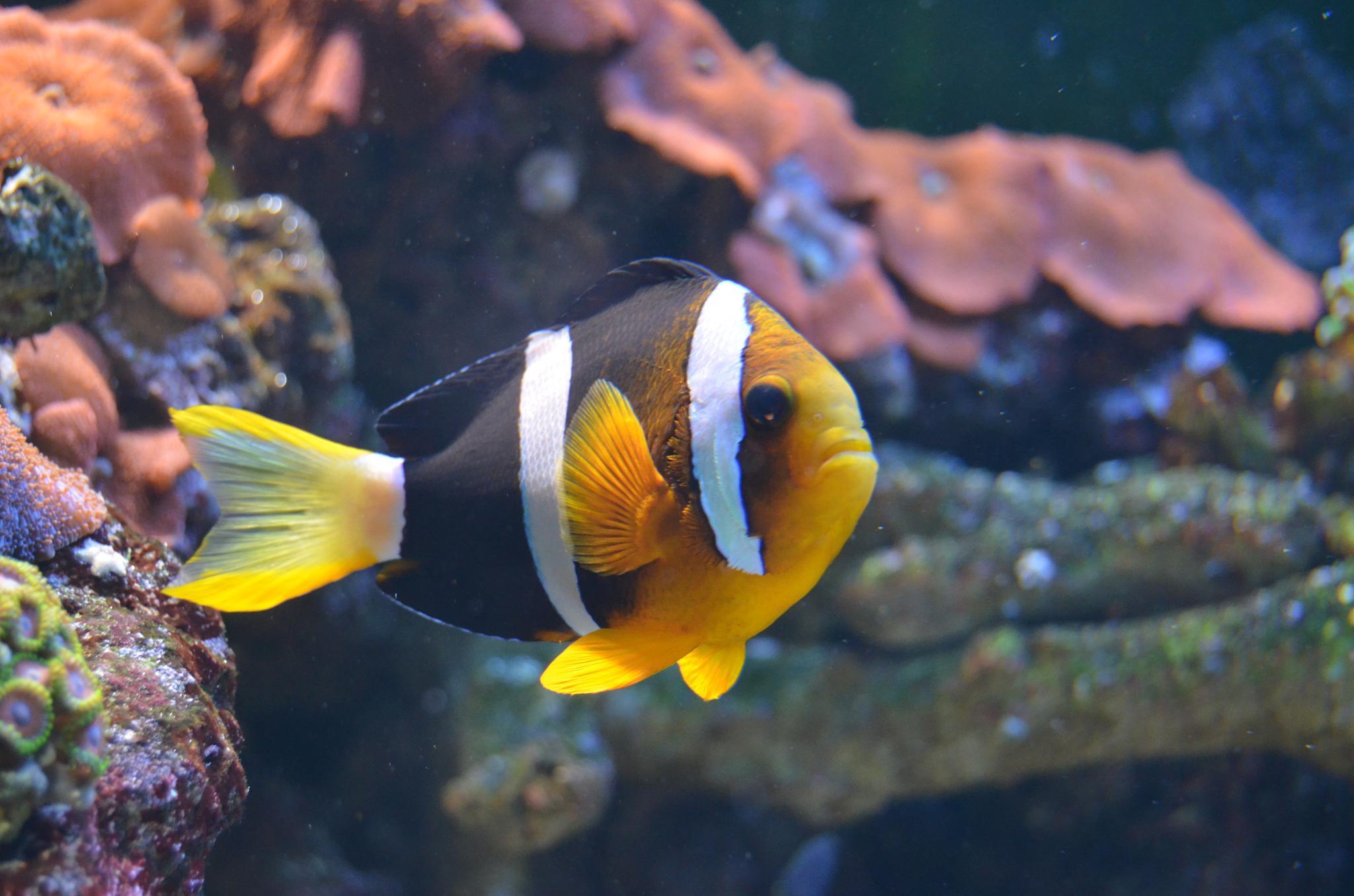 fish by tuba.sahiner