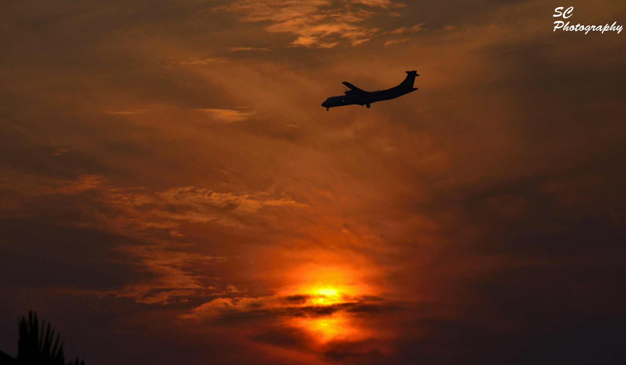 In the evening flight at sunset by surajit.chakraborty.3745