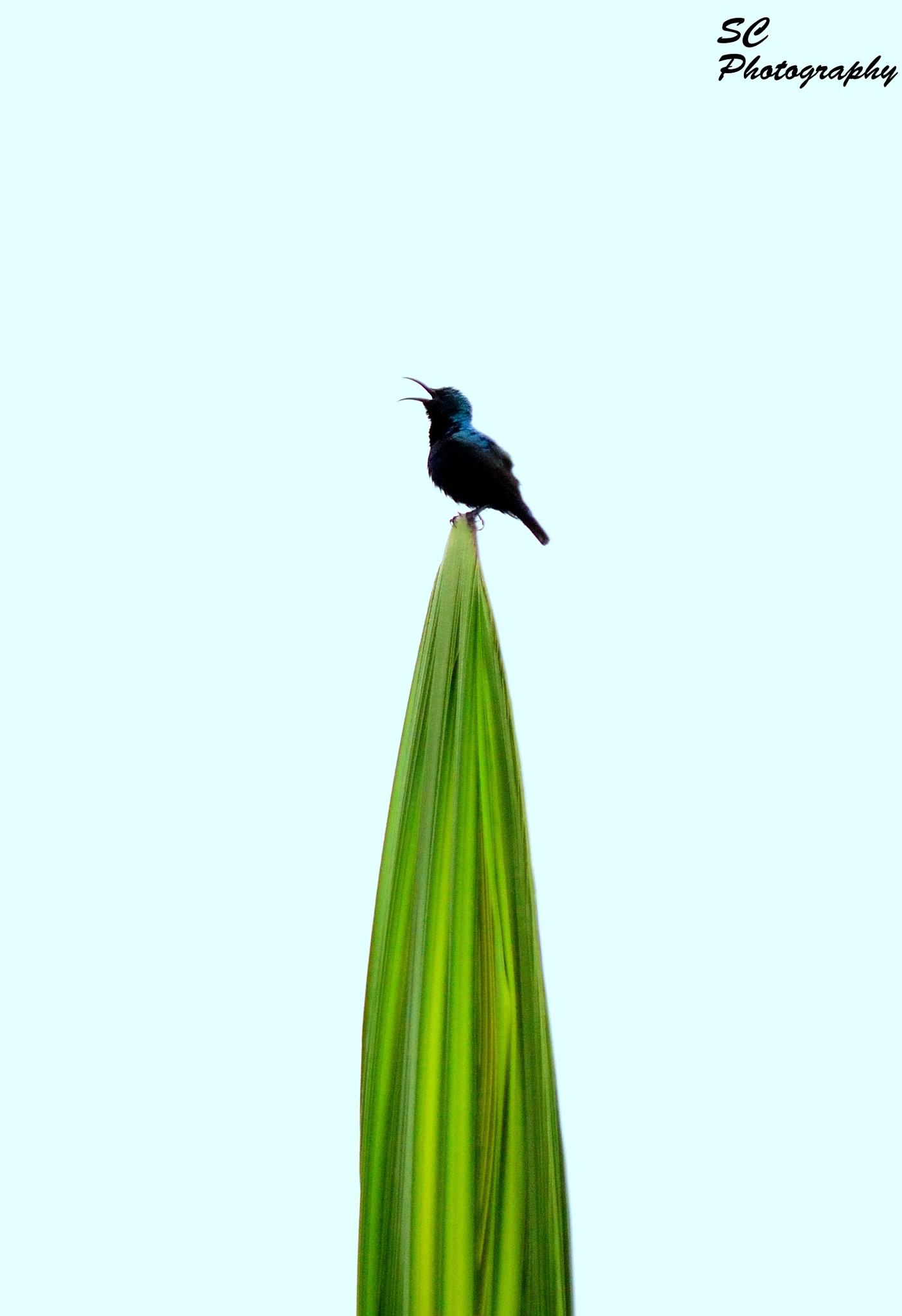 Purple SunBird by surajit.chakraborty.3745