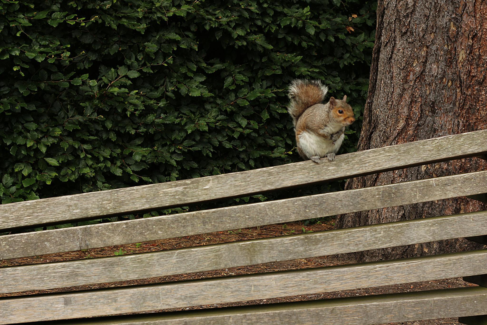 Scared Squirrel by tayfun.tatar
