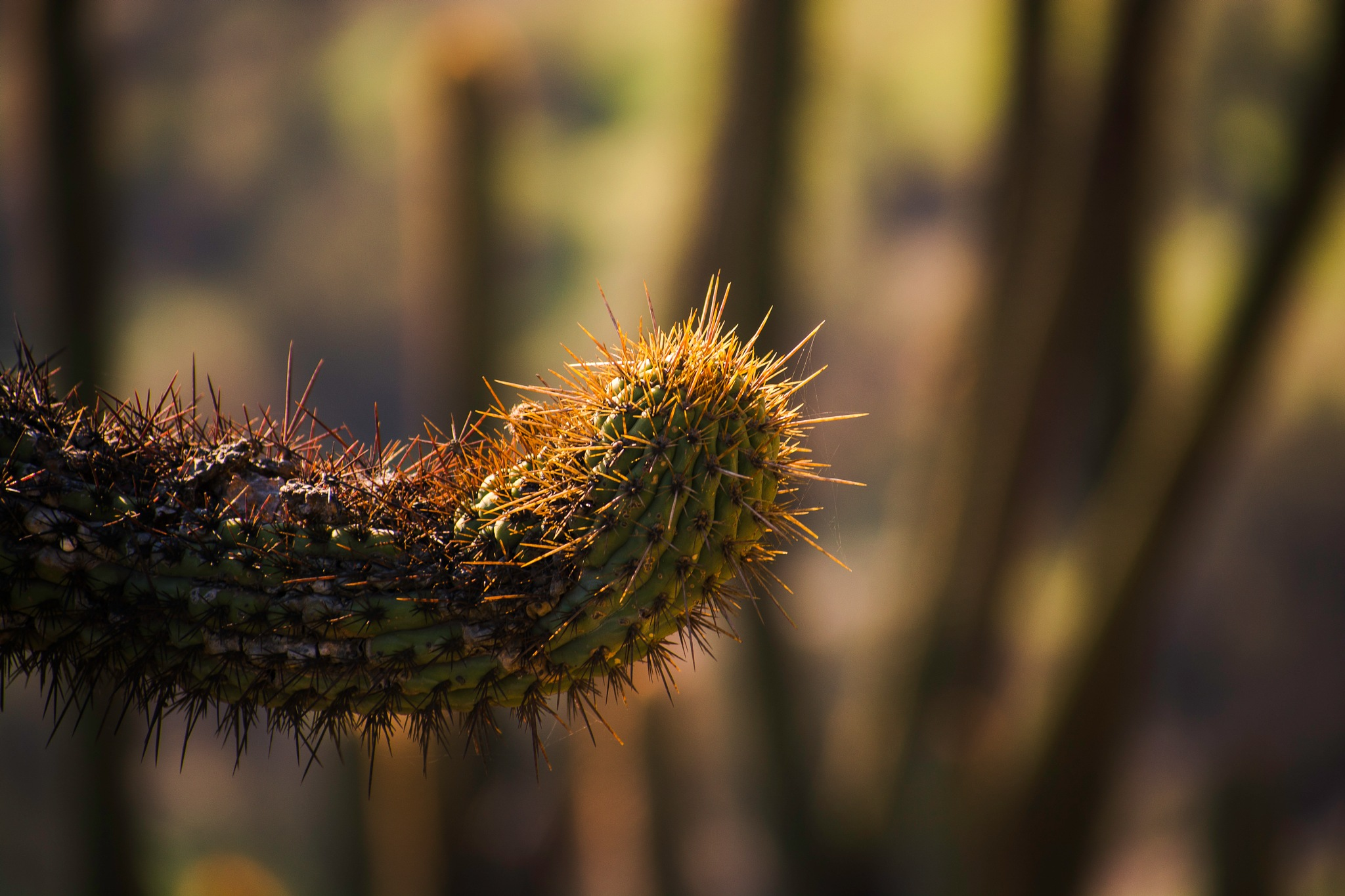 Extraña forma. (cactus) by CarlosVenegas.