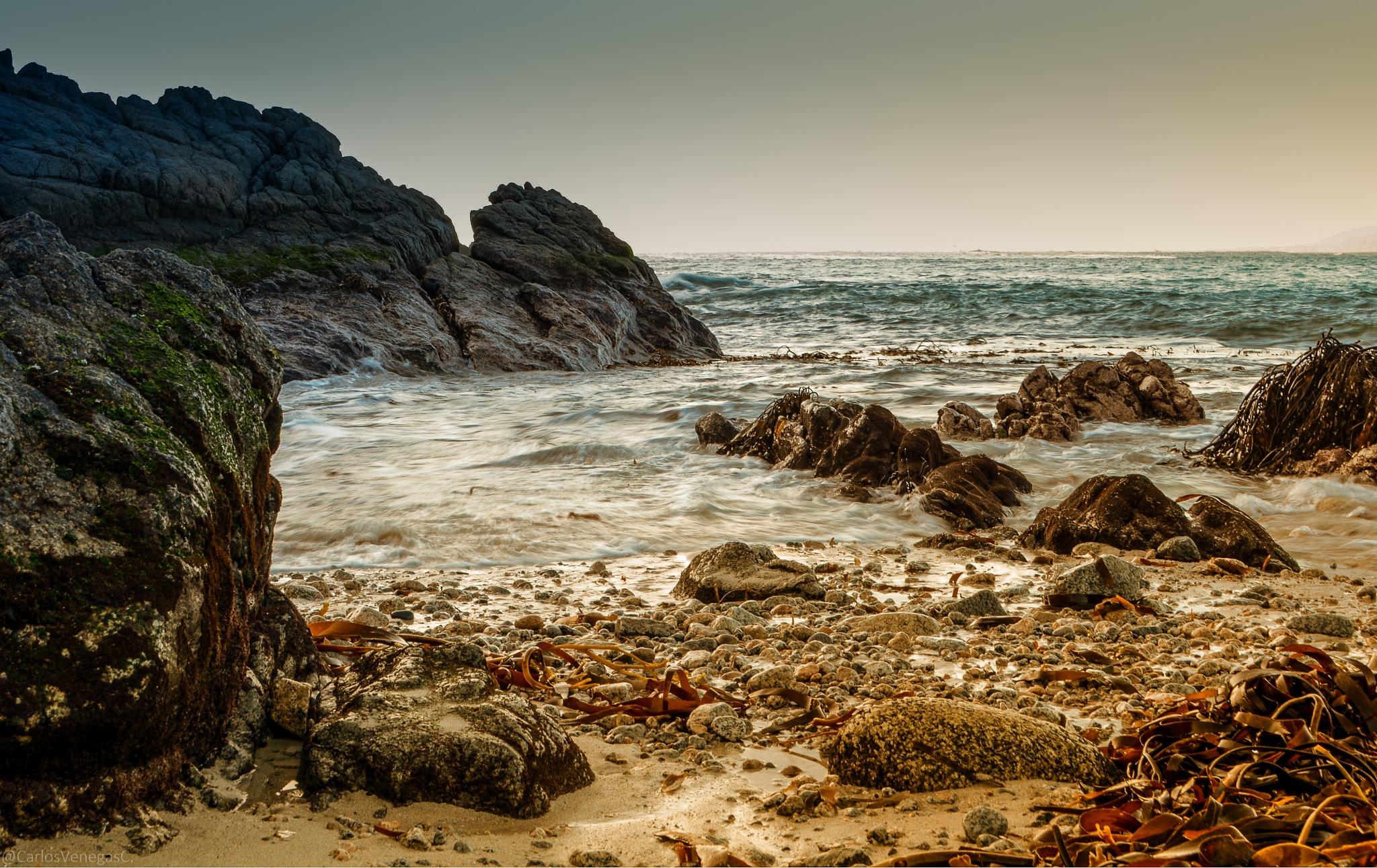 Playa el Canelo. by CarlosVenegas.