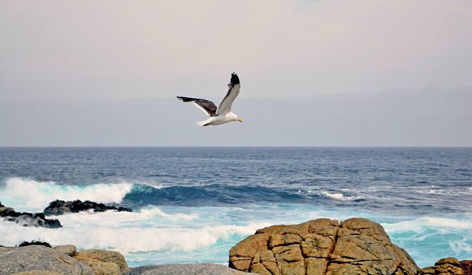 Photo in Landscape #costas de chile #isla negra
