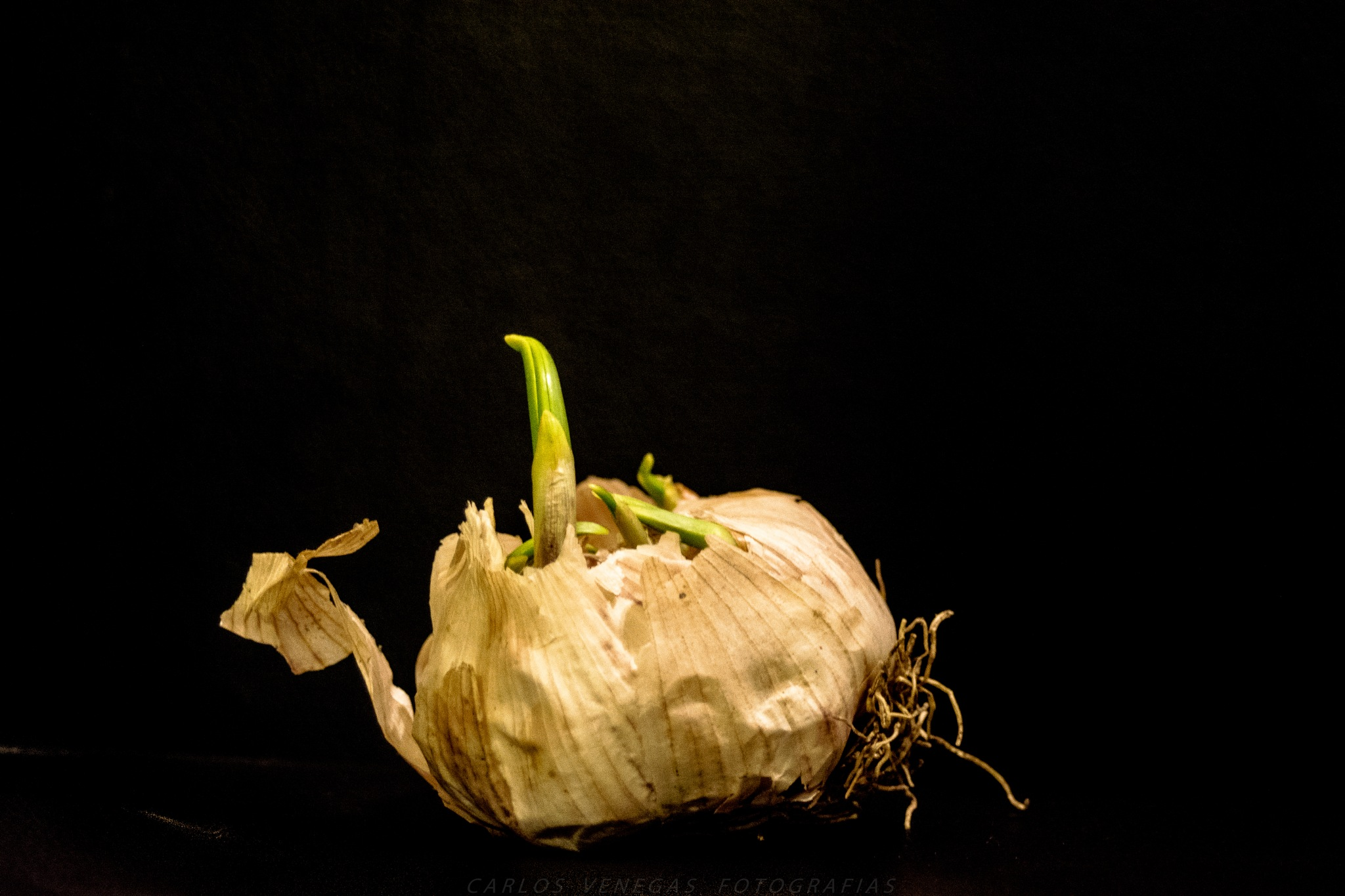 Garlic. by CarlosVenegas.