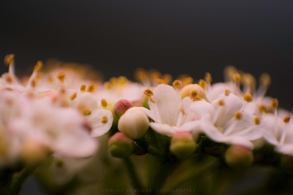 Intimidad Floral #4 by CarlosVenegas.