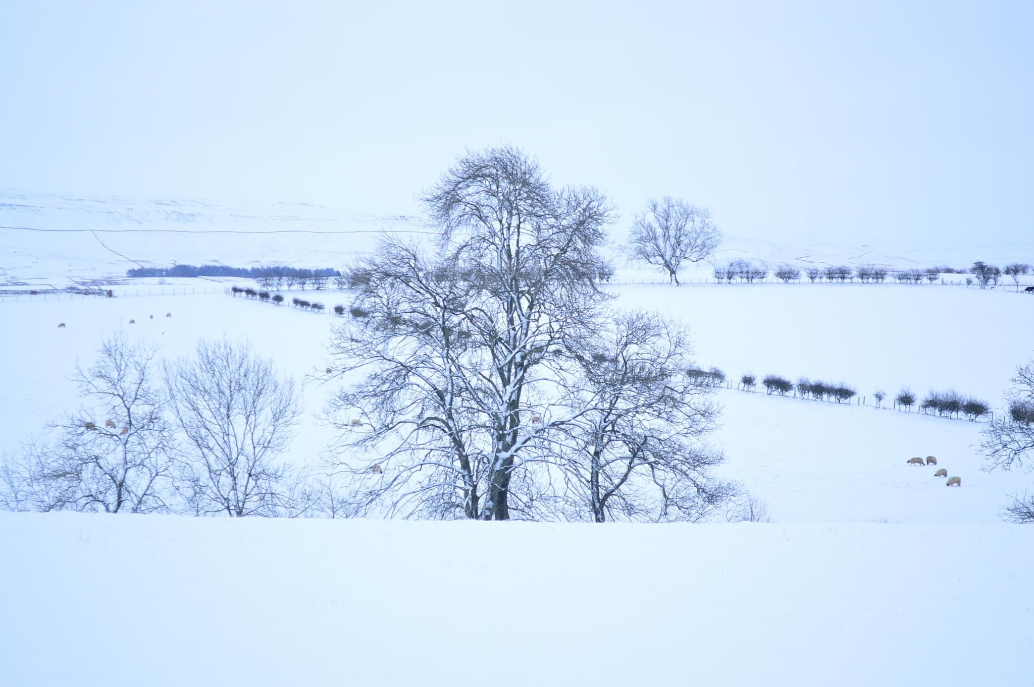 Snowscape by andrewwalker14