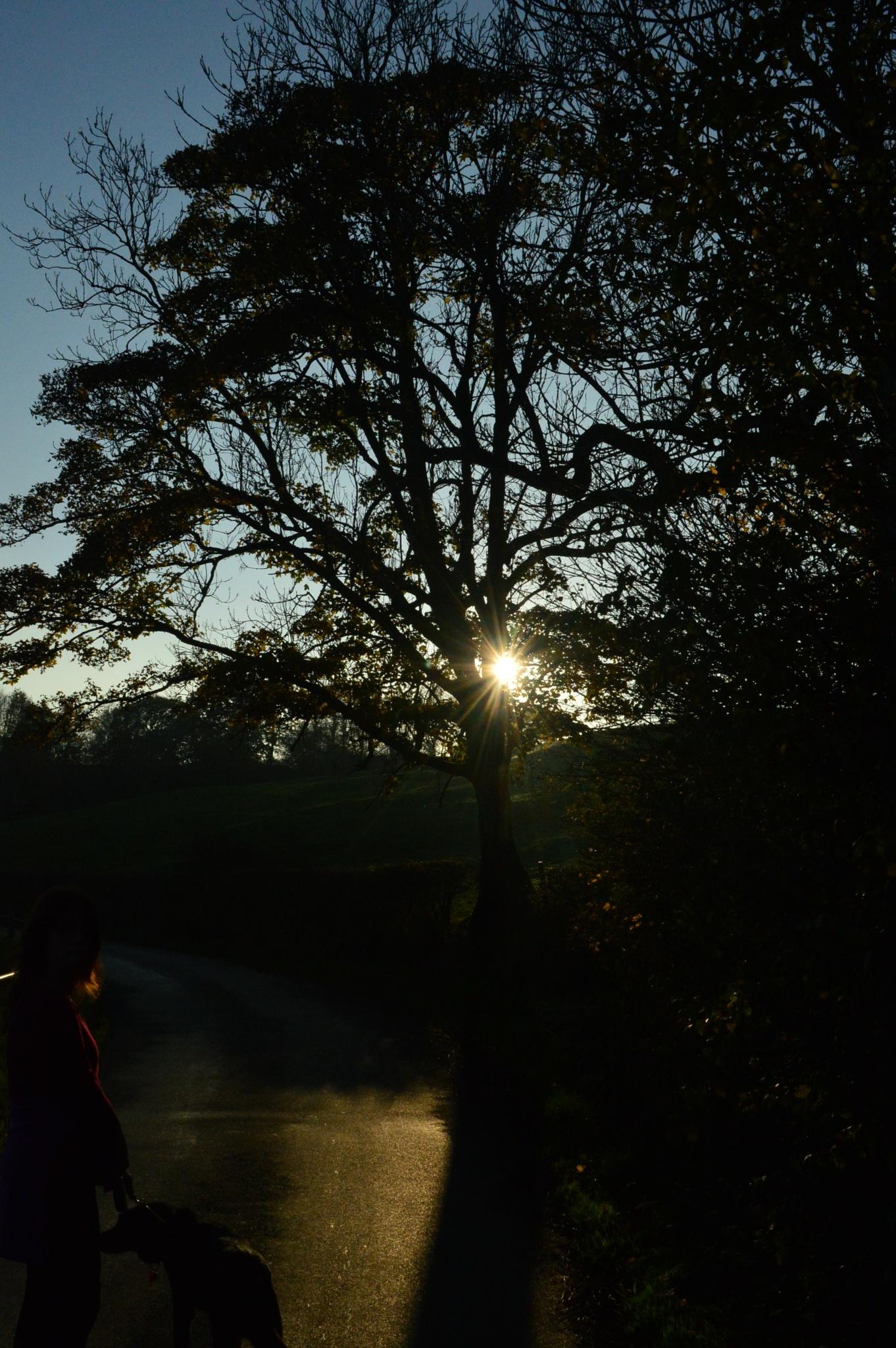 Evening Sun by andrewwalker14