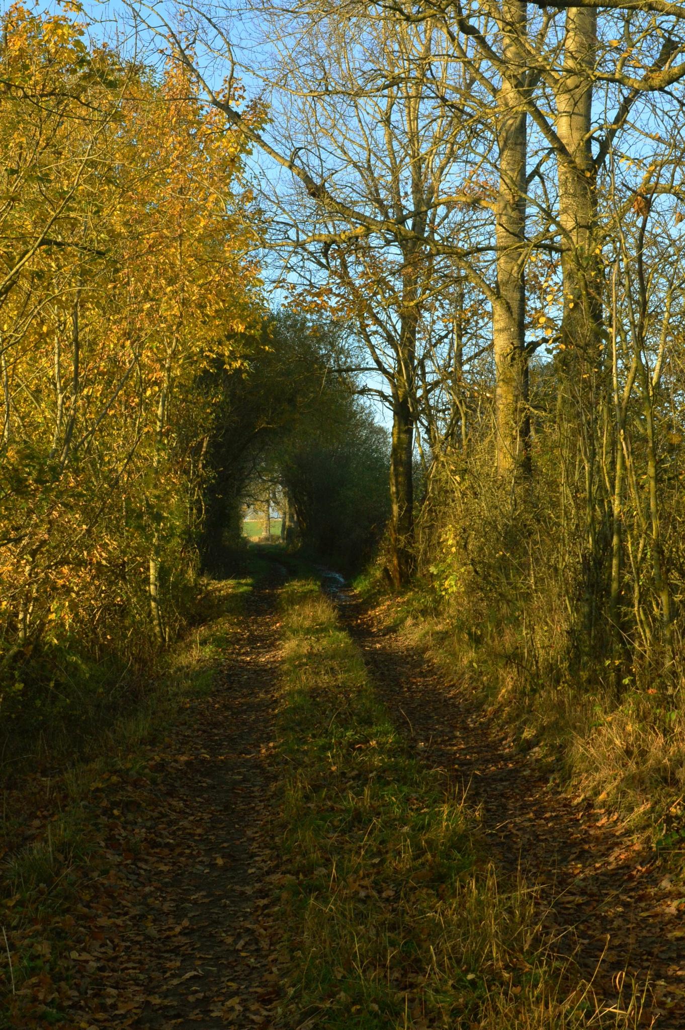 Green Lane by andrewwalker14