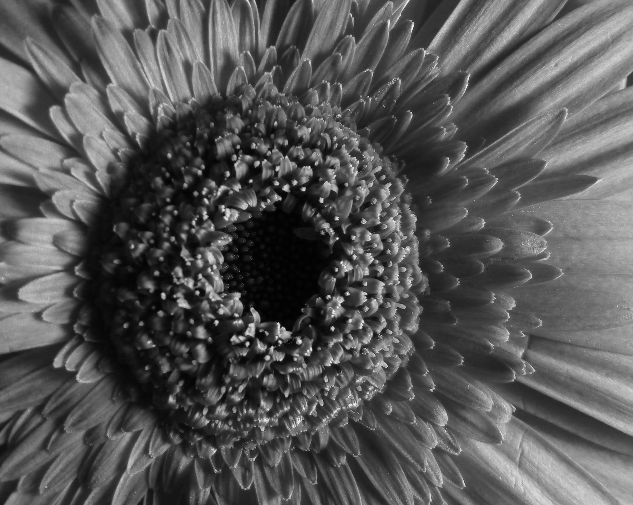 B&W Flower by Reuben Kinny